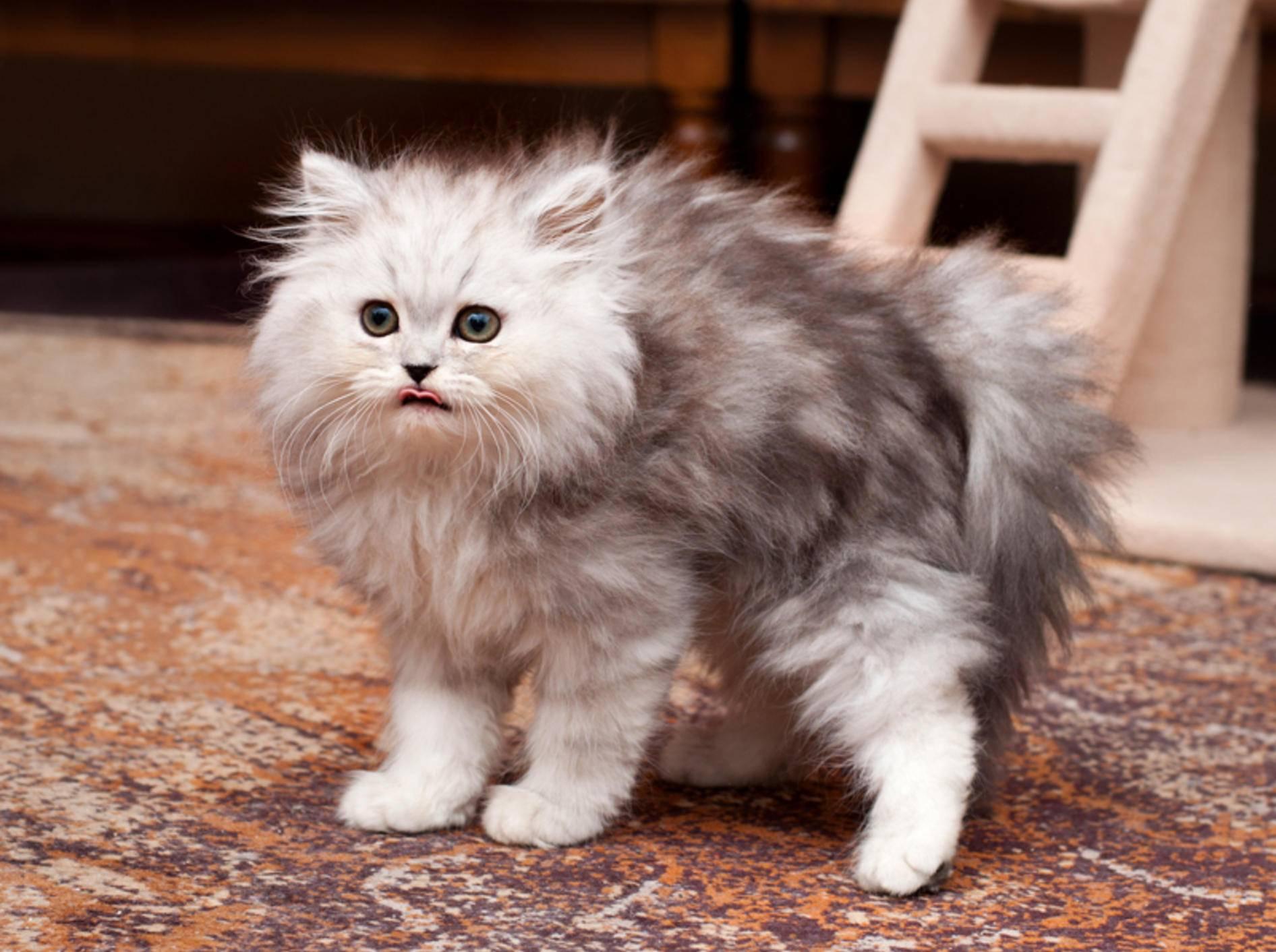 Wenn die Katze scheu ist: Mögliche Gründe – Bild: Shutterstock / Trybex