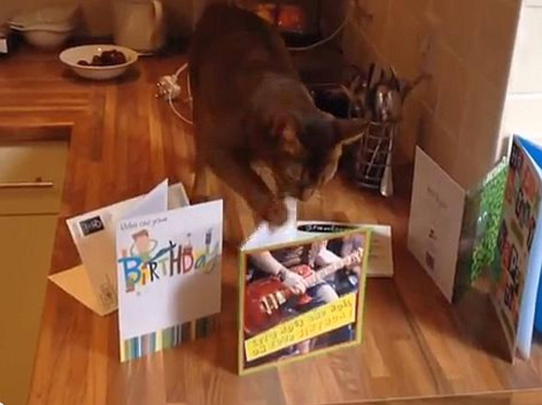Vor dieser Katze ist keine Geburtstagskarte sicher – Bild: Youtube / Lewis Tollan