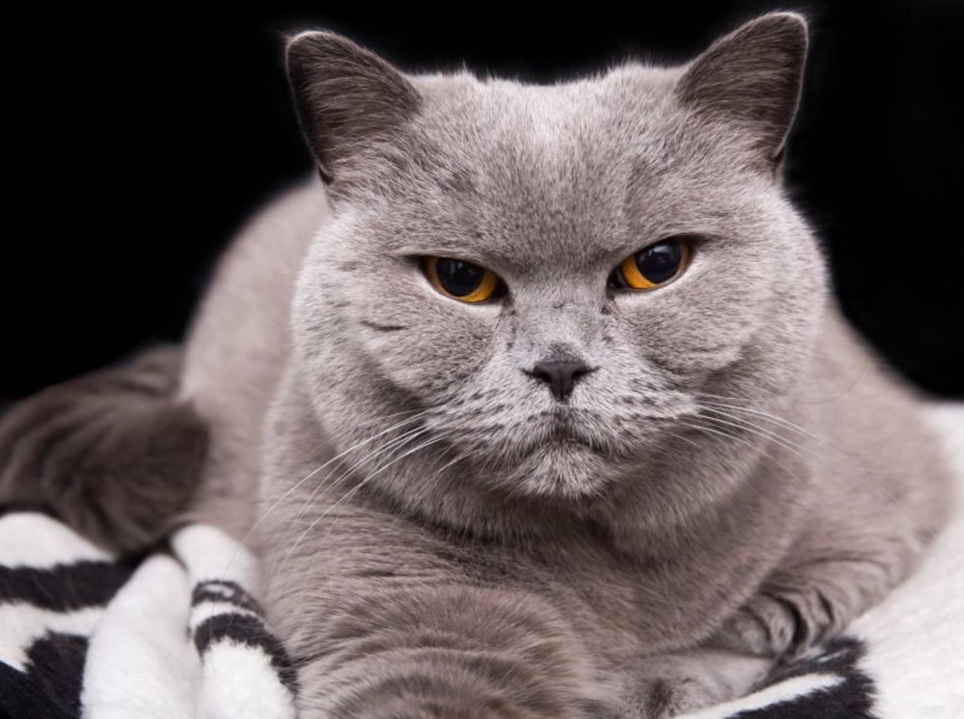 Für eine alte Katze ist vieles nicht mehr ganz so leicht – Bild: Shutterstock / Maciej Czekajewski