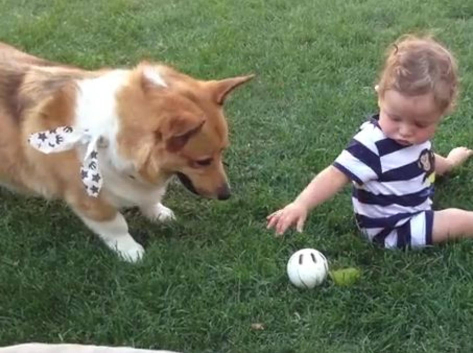 Ballspielen mit dem geduldigsten Hund der Welt – Bild: Youtube / Amy Slack