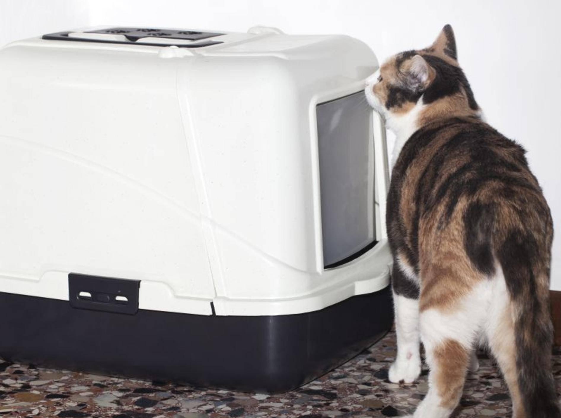 Das perfekte Katzenklo ist groß, sauber und stabil – Bild: Shutterstock / Bicheyennezj