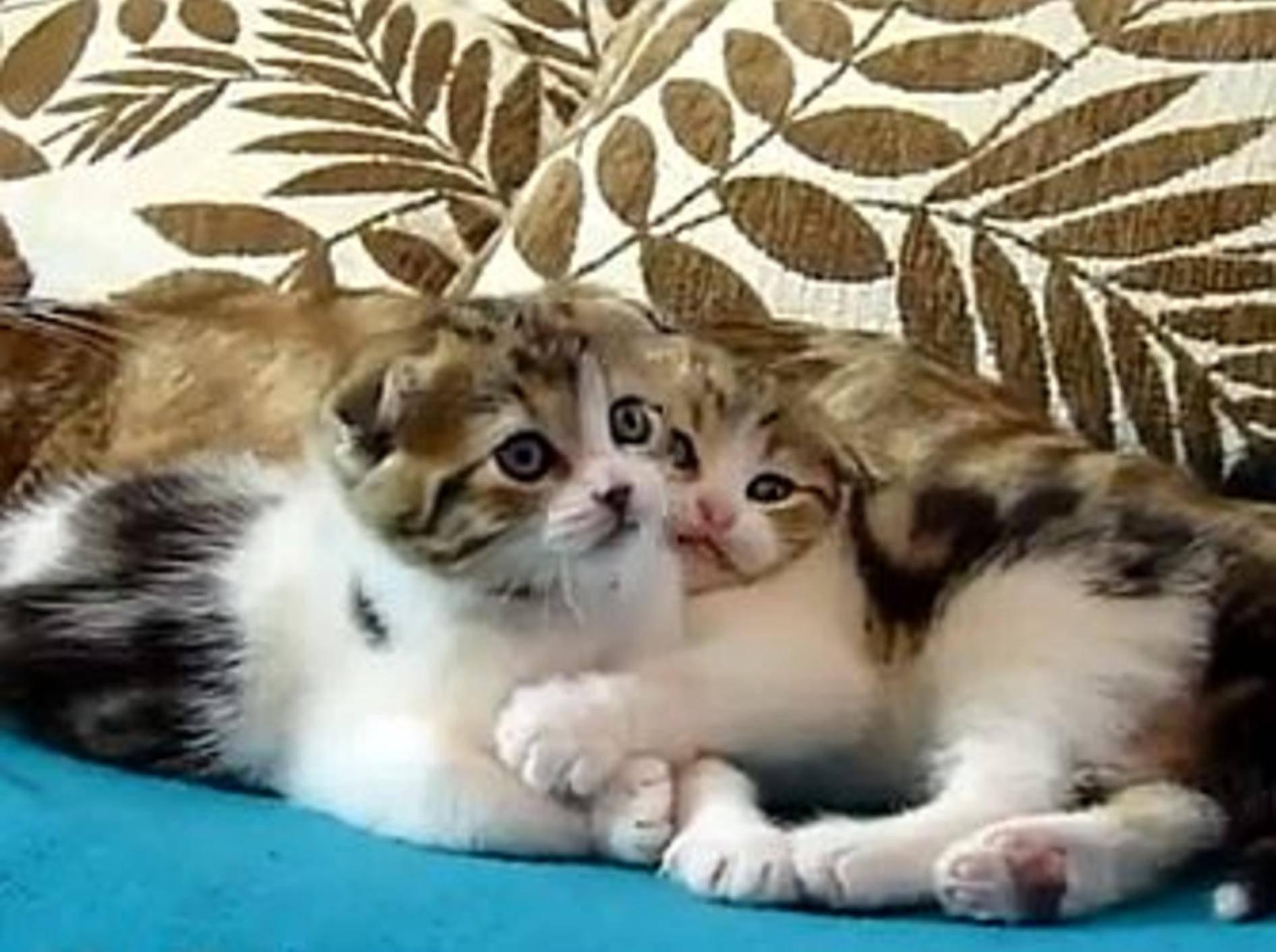 Zwei Katzenzwillinge zum Verlieben – Bild: Youtube / Funnycatsandnicefish