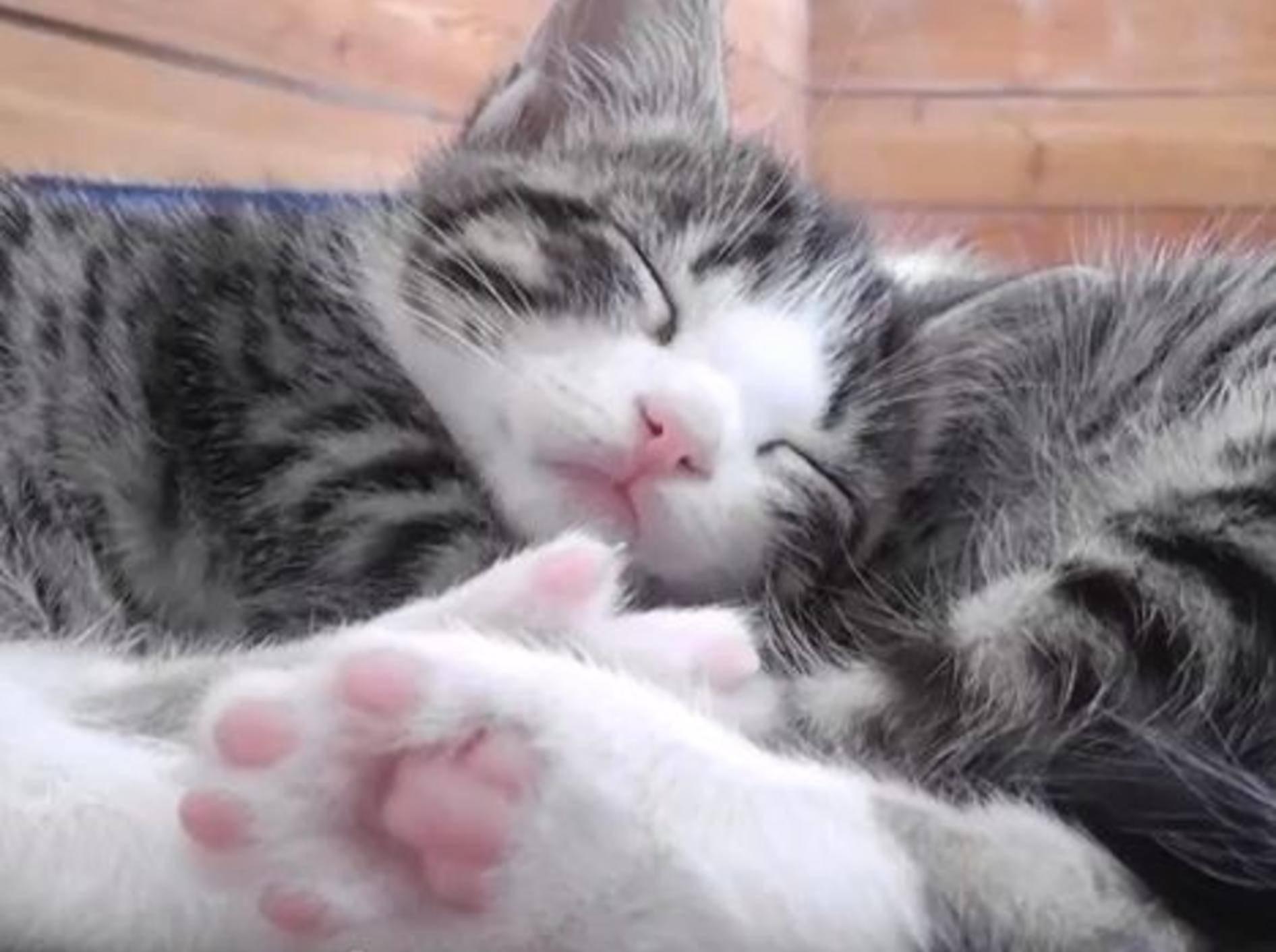 Wunderschöne Katzenbabys genießen die Sonne – Bild: Youtube / DrNworb