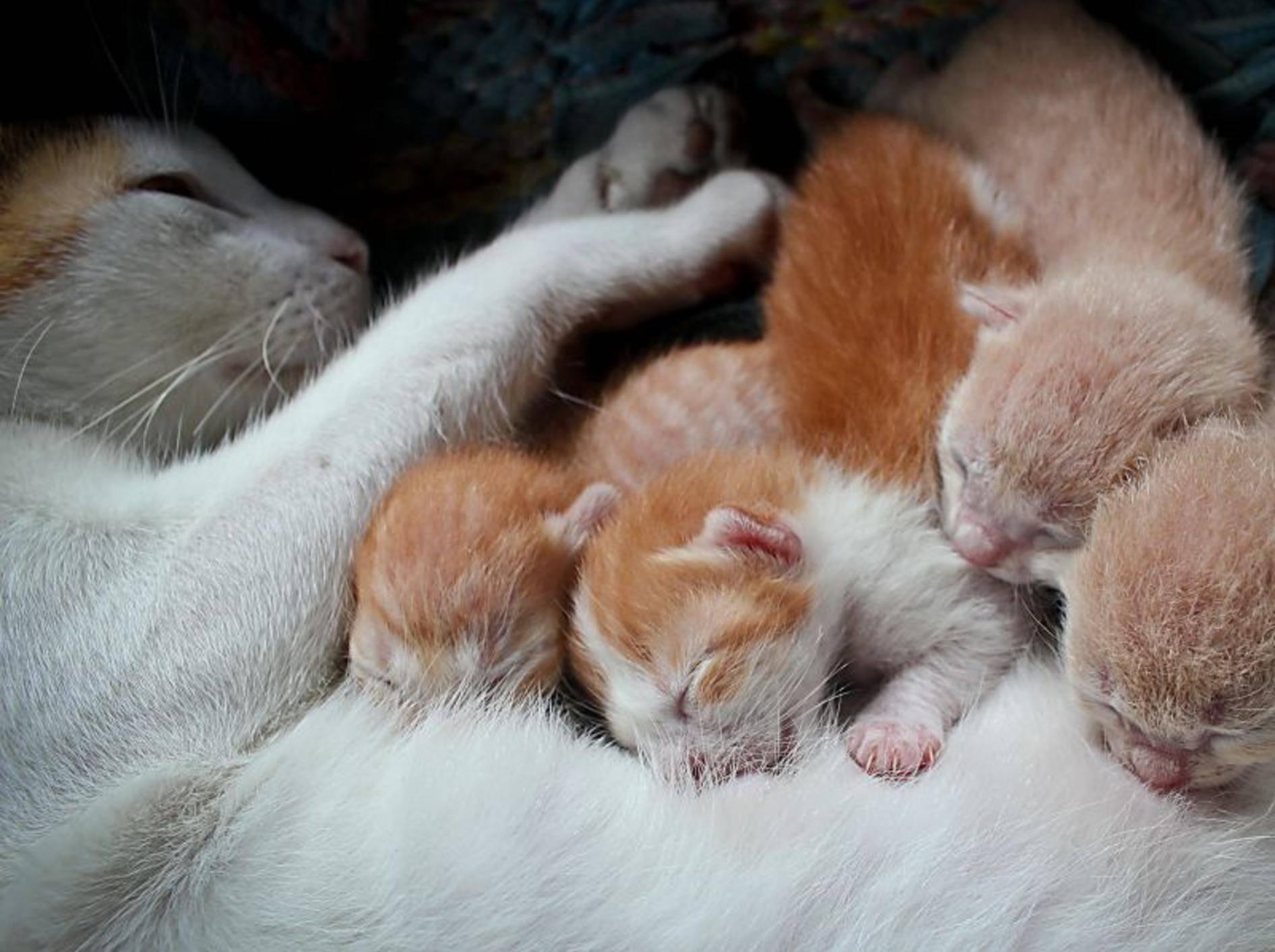 Schlafen, kuscheln, trinken: Diese Katzenbabys müssen noch groß und stark werden – Bild: Shutterstock / Grey Carnation
