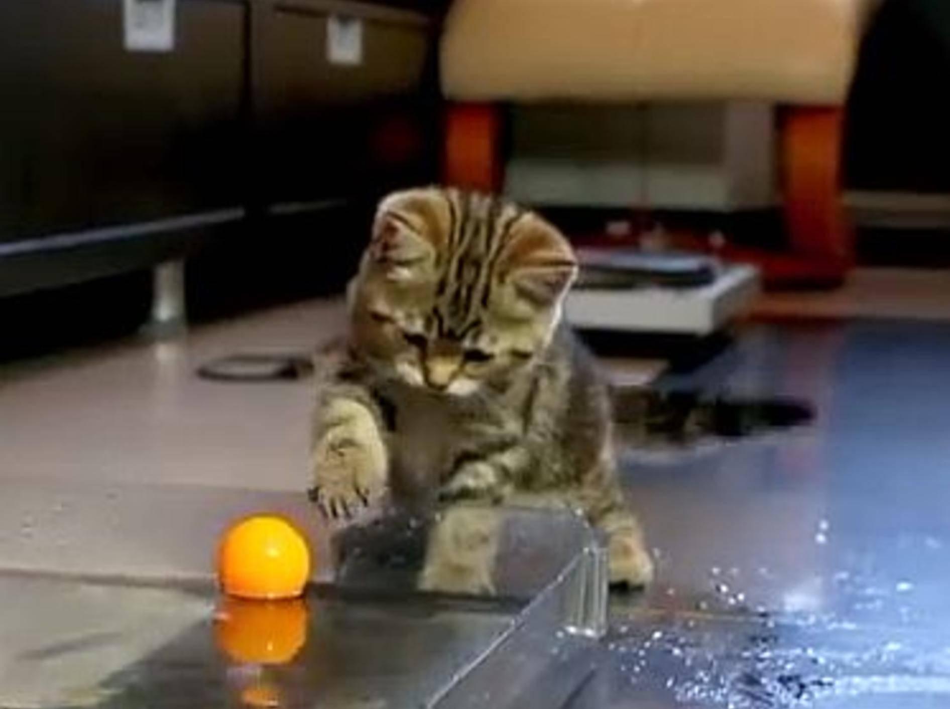 Die süßeste Wasserball-Fans der Welt – Bild: Youtube / Funnycatsandnicefish
