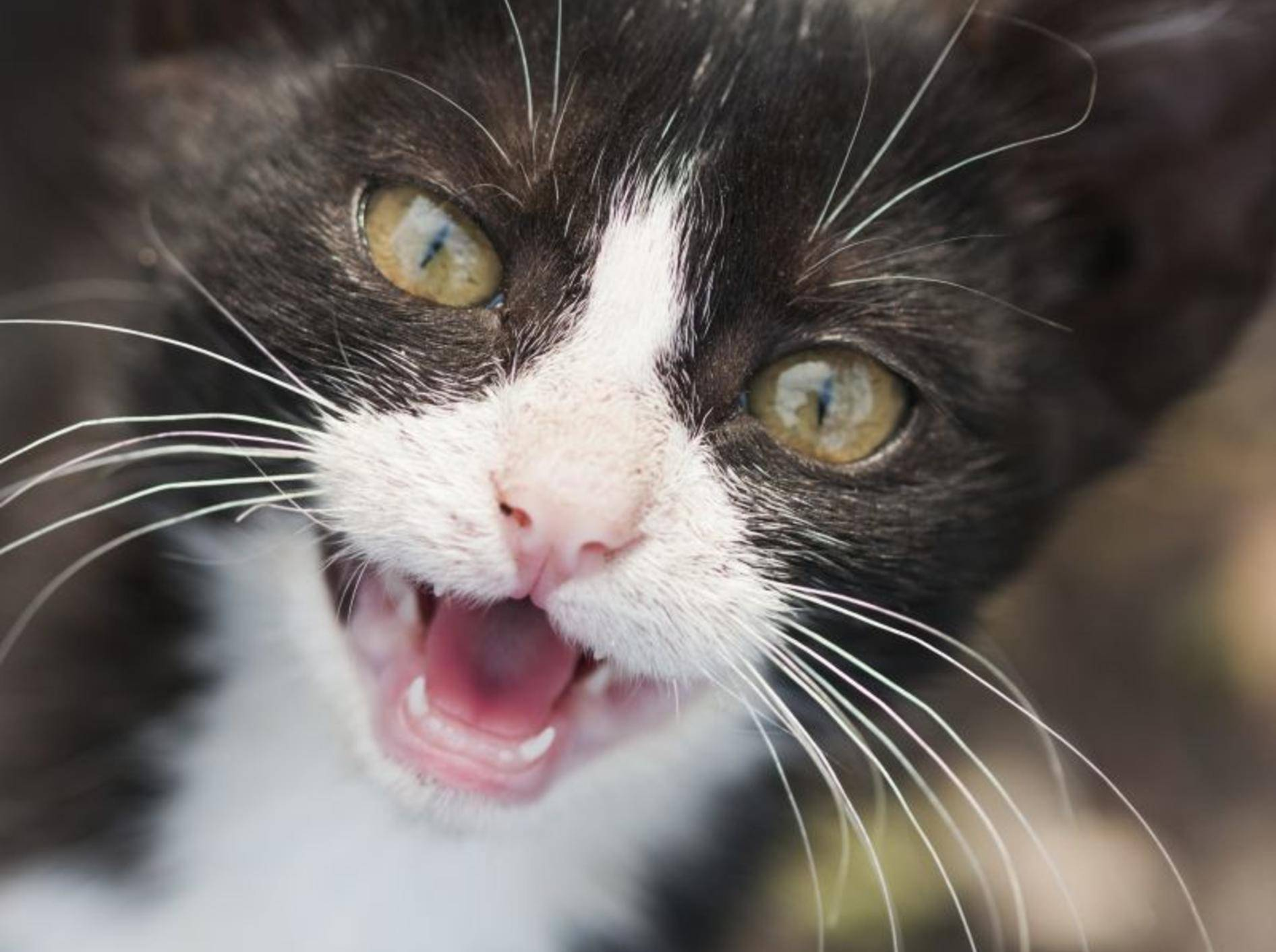 Verhaltensstörungen bei Katzen können sich sehr vielfältig äußern – Bild: Shutterstock / ileana_bt