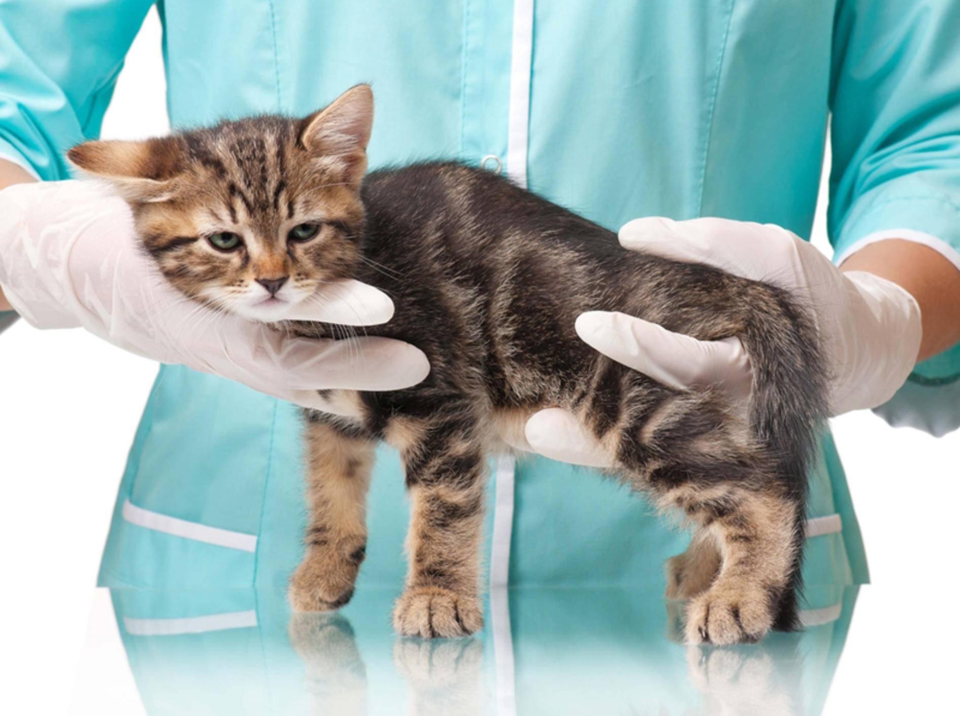Knochenbrüche behandeln: Gliedmaßen entlasten und schnell zum Tierarzt – Bild: Shutterstock / Lubava