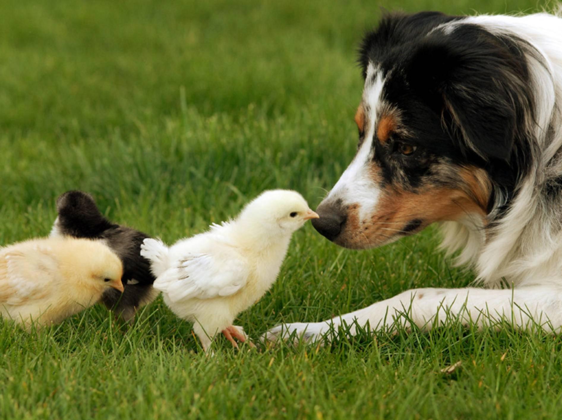 Ostergeschenkideen für Ihren Hund – Bild: Shutterstock / Tracey Helmboldt
