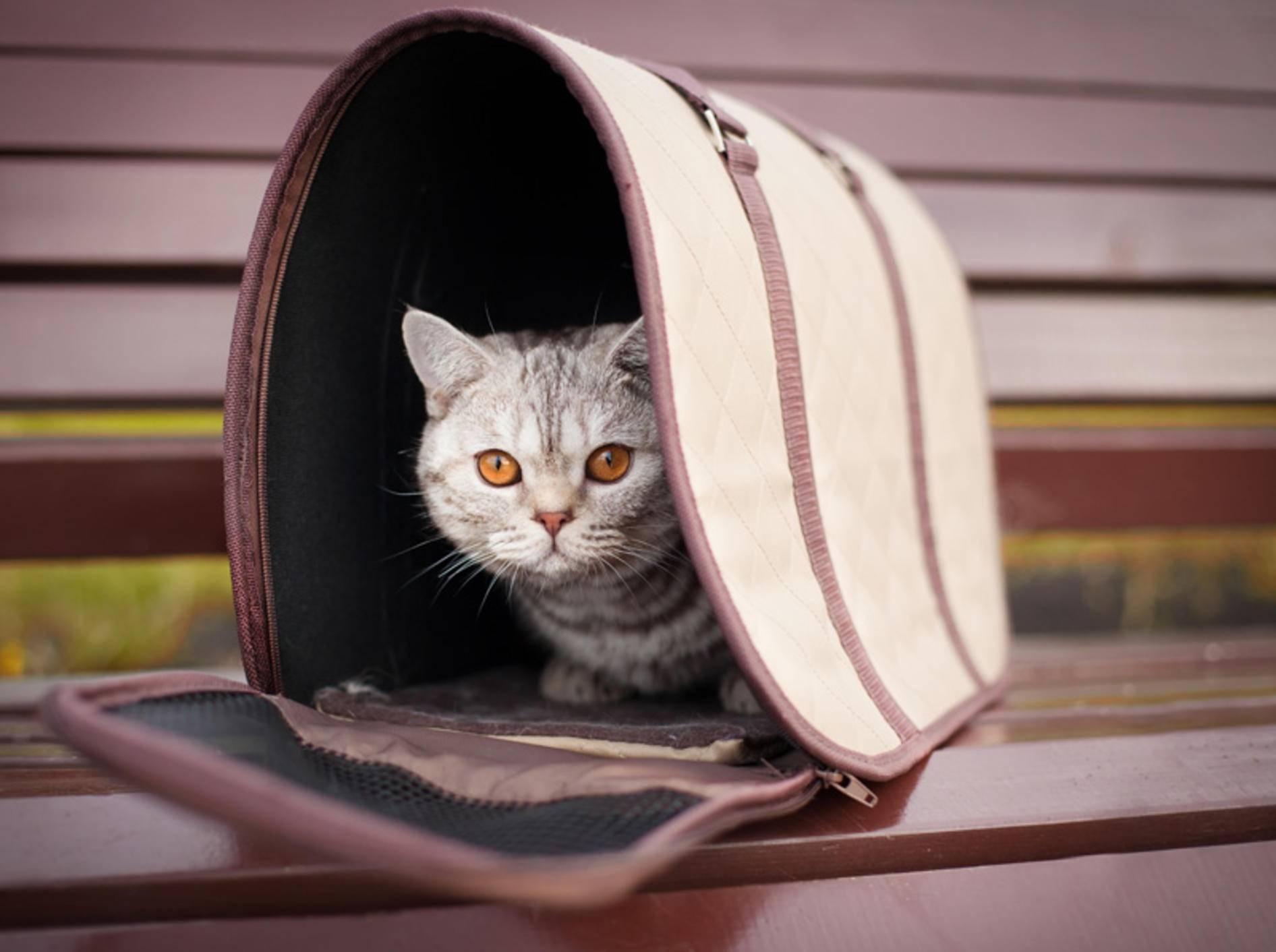 Transporttaschen für Katzen: Tipps und Ideen – Bild: Shutterstock / Elena Efimova