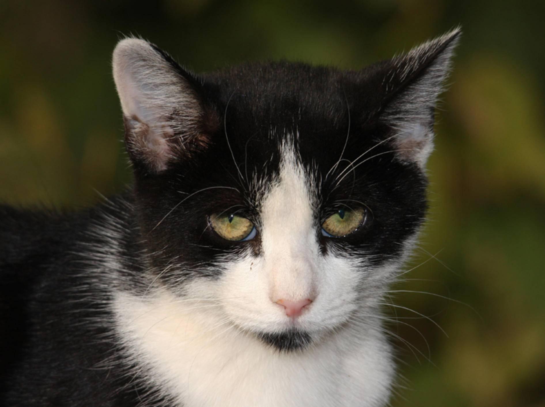Katze mit Verstopfung behandeln: Tipps – Bild: Shutterstock / Joseph M. Arseneau