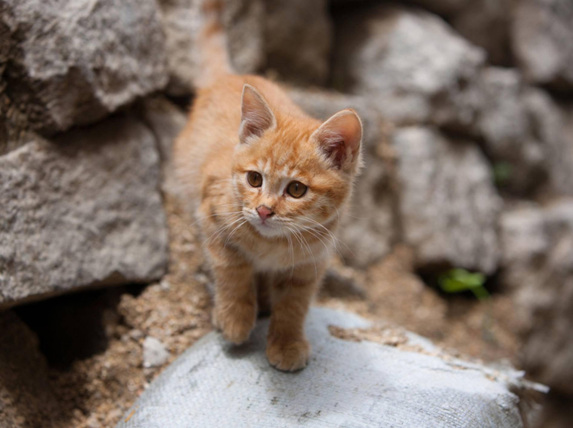 Welchen süßen Namen für Katzen diese sich wohl aussuchen würde? – Bild: Shutterstock / quangbuiphotography
