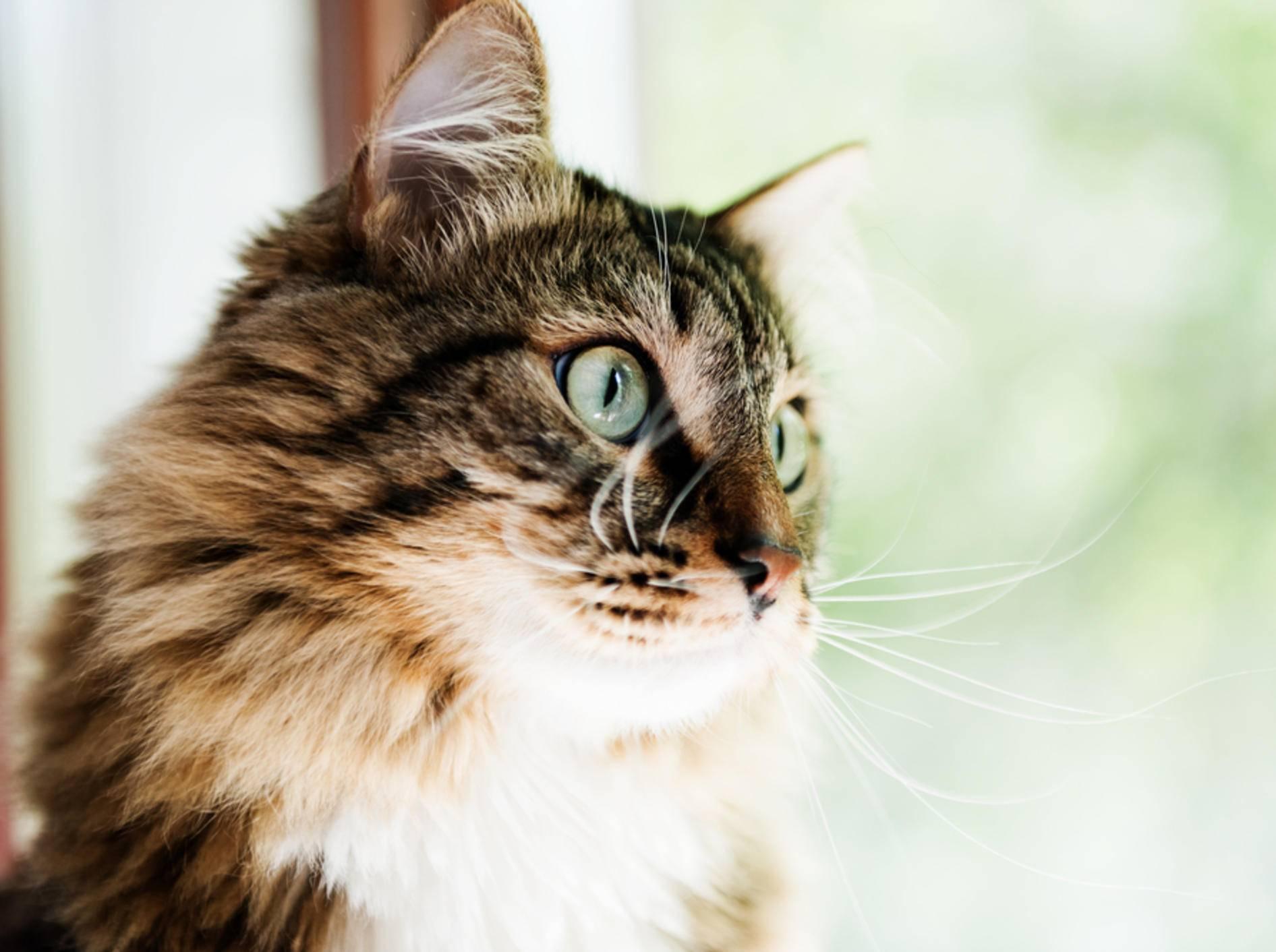 Wichtig: Kippfenster katzensicher machen – Bild: Shutterstock / Valerie Potapova