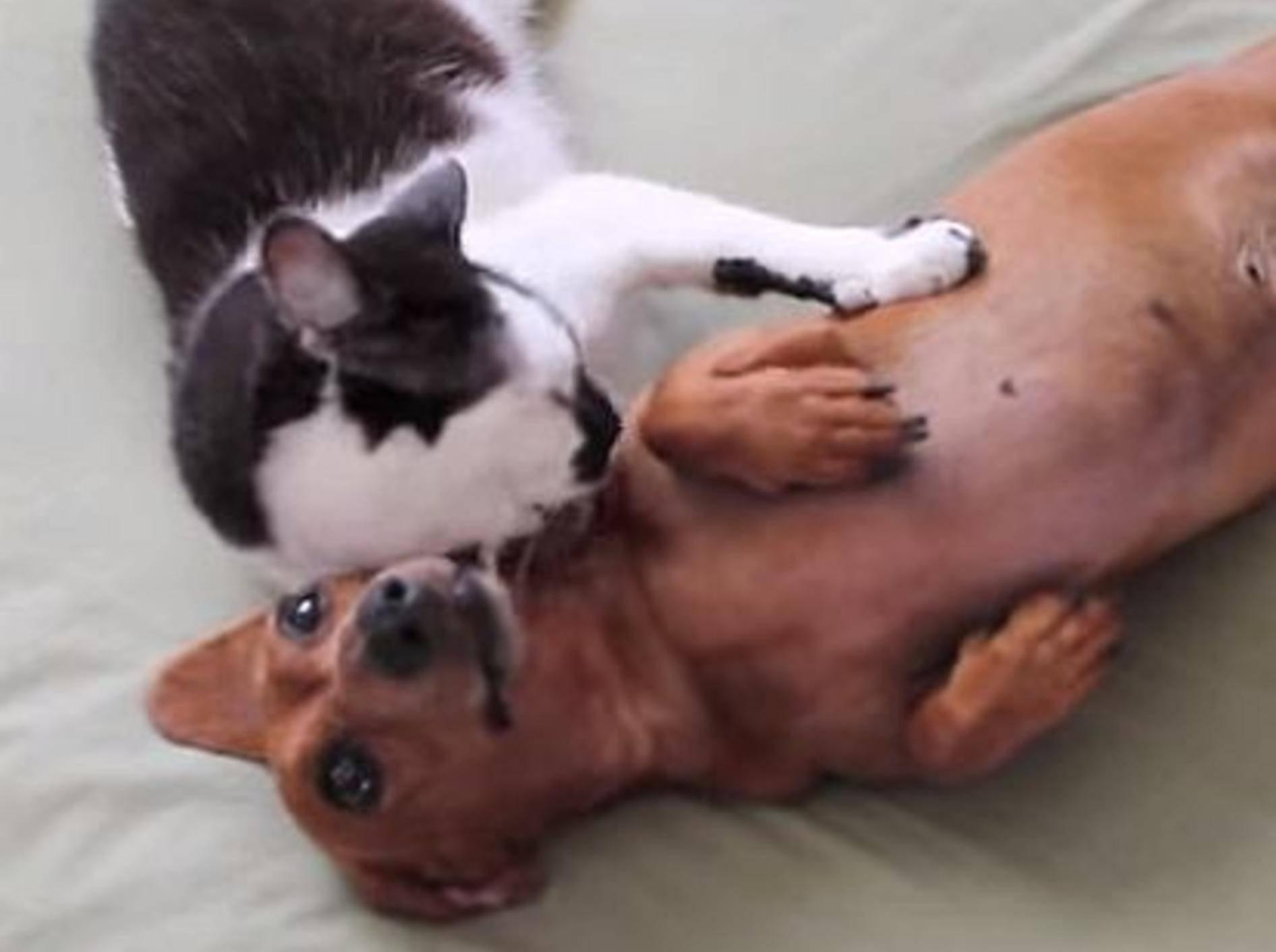 katze-und-hund-kuscheln