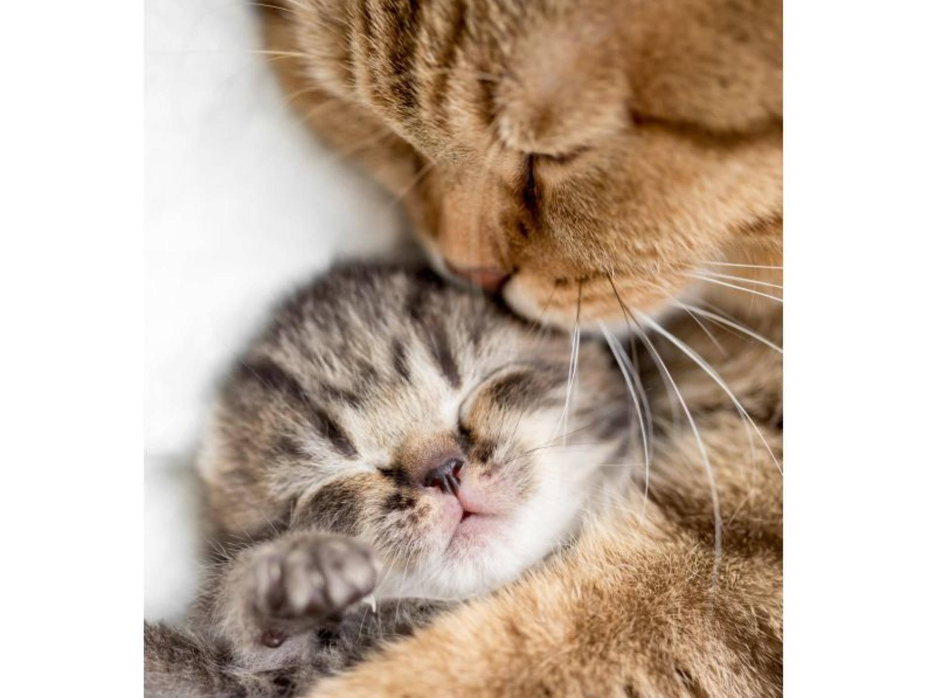 Pssst, nicht aufwecken: Dieses kleine Katzenbaby braucht seinen Schlaf um groß und stark zu werden – Bild: Shutterstock / Andrey_Kuzmin