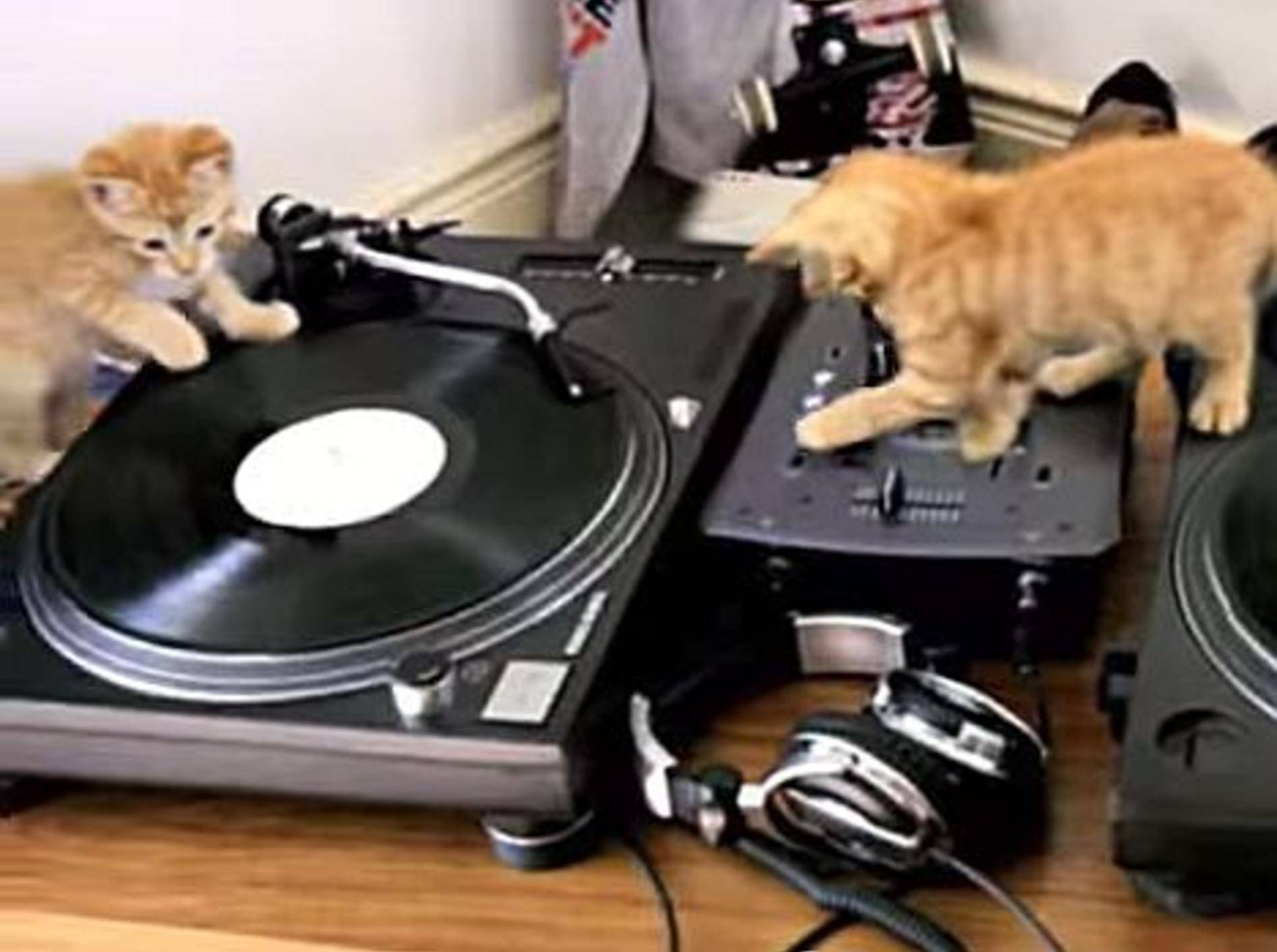 Süße Katzengang am DJ-Pult – Bild: Youtube / larsen161