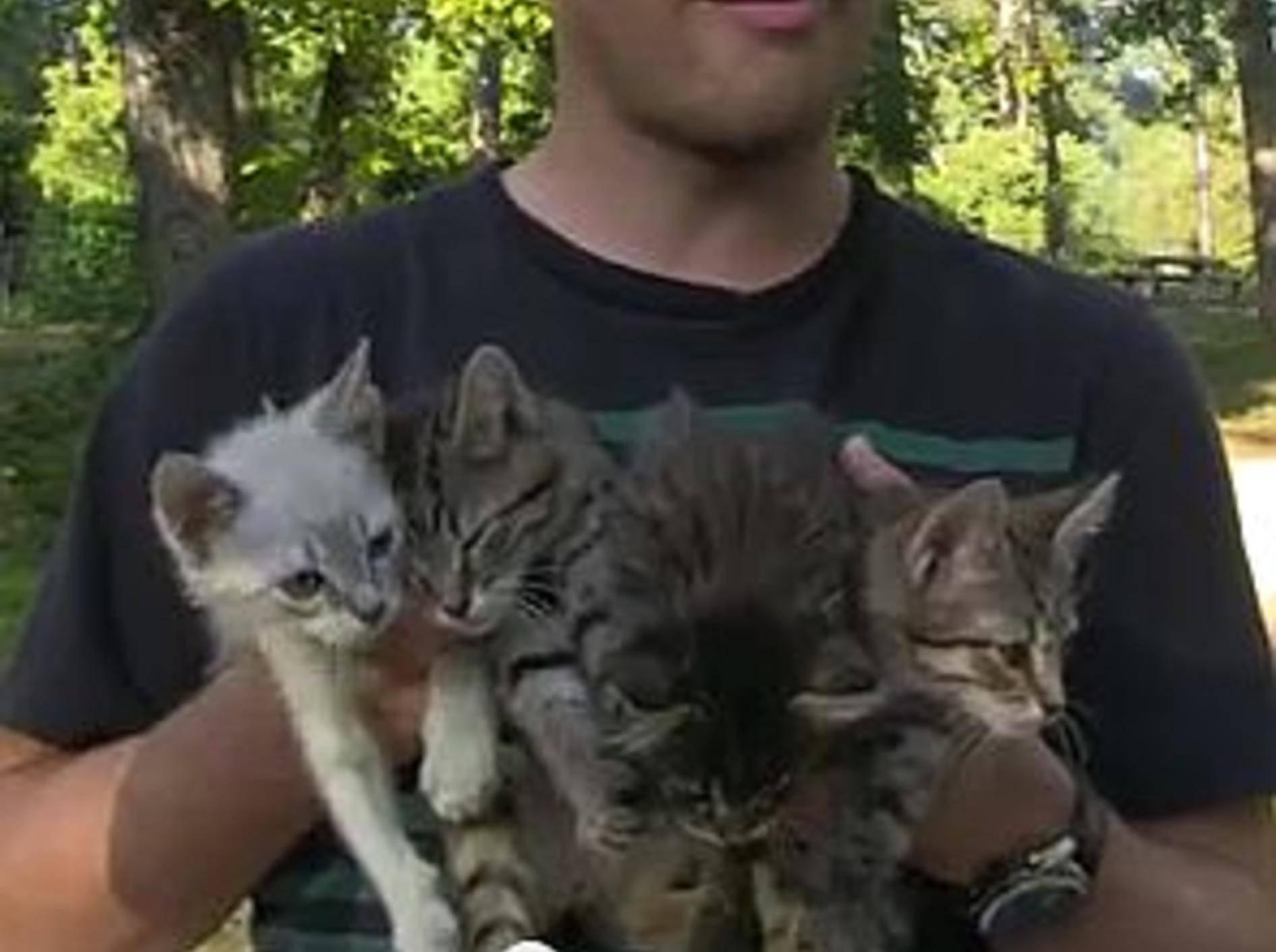 Spaziergänger retten eine ausgesetzte Katzenbande – Bild: Youtube / Garzilly