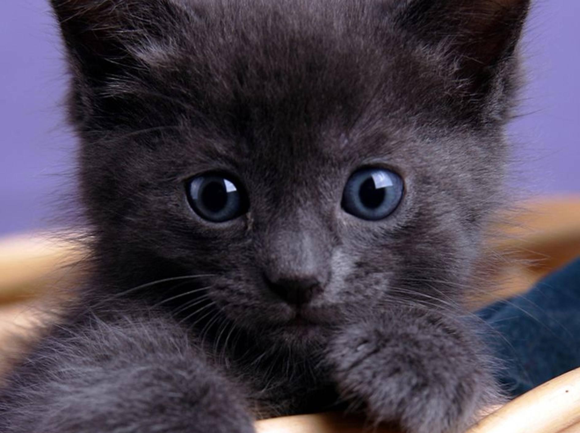 Bunte Ostergeschenke für Katzen – Bild: Shutterstock / Martin Smith