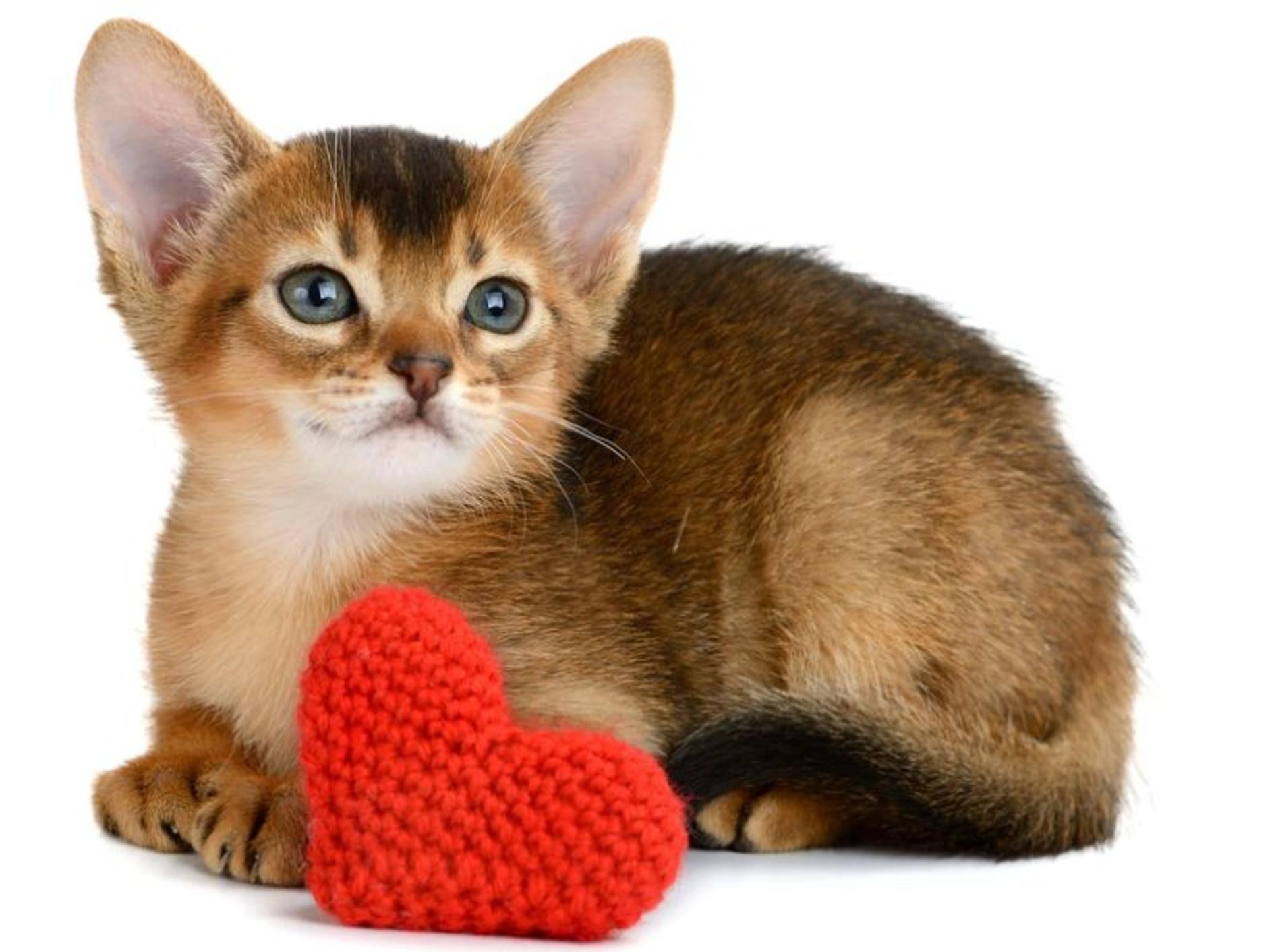 Vier Muttertagsgeschenke für Katzenhalter –Bild: Shutterstock / nelik