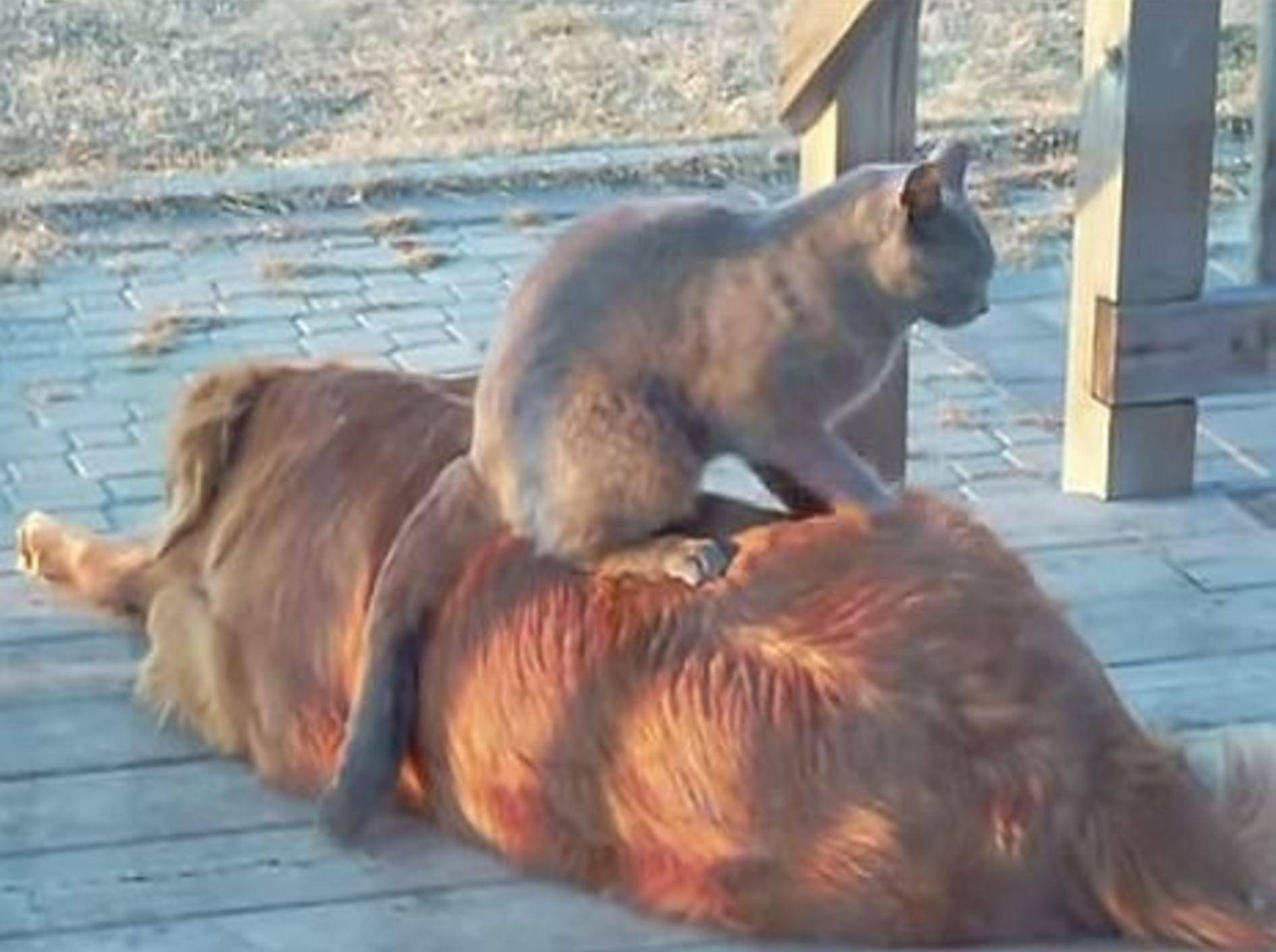 So nett sind Katzen manchmal zu Hunden – Bild: Youtube / YourLifeCycle