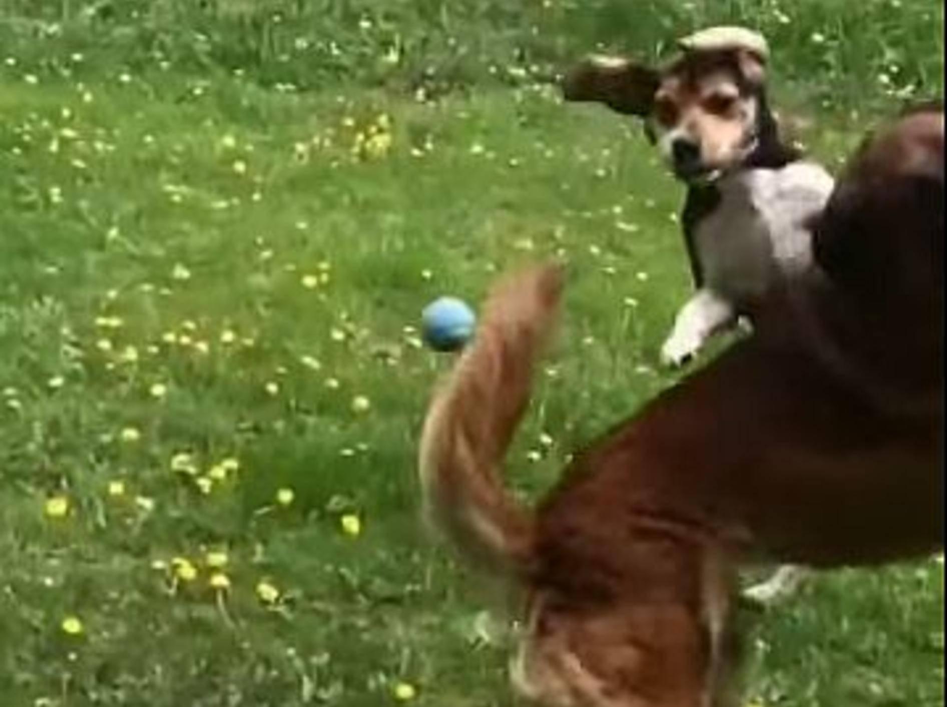 Hundekumpels präsentieren: Ballspielen für Anfänger – Bild: Youtube / unperfect97