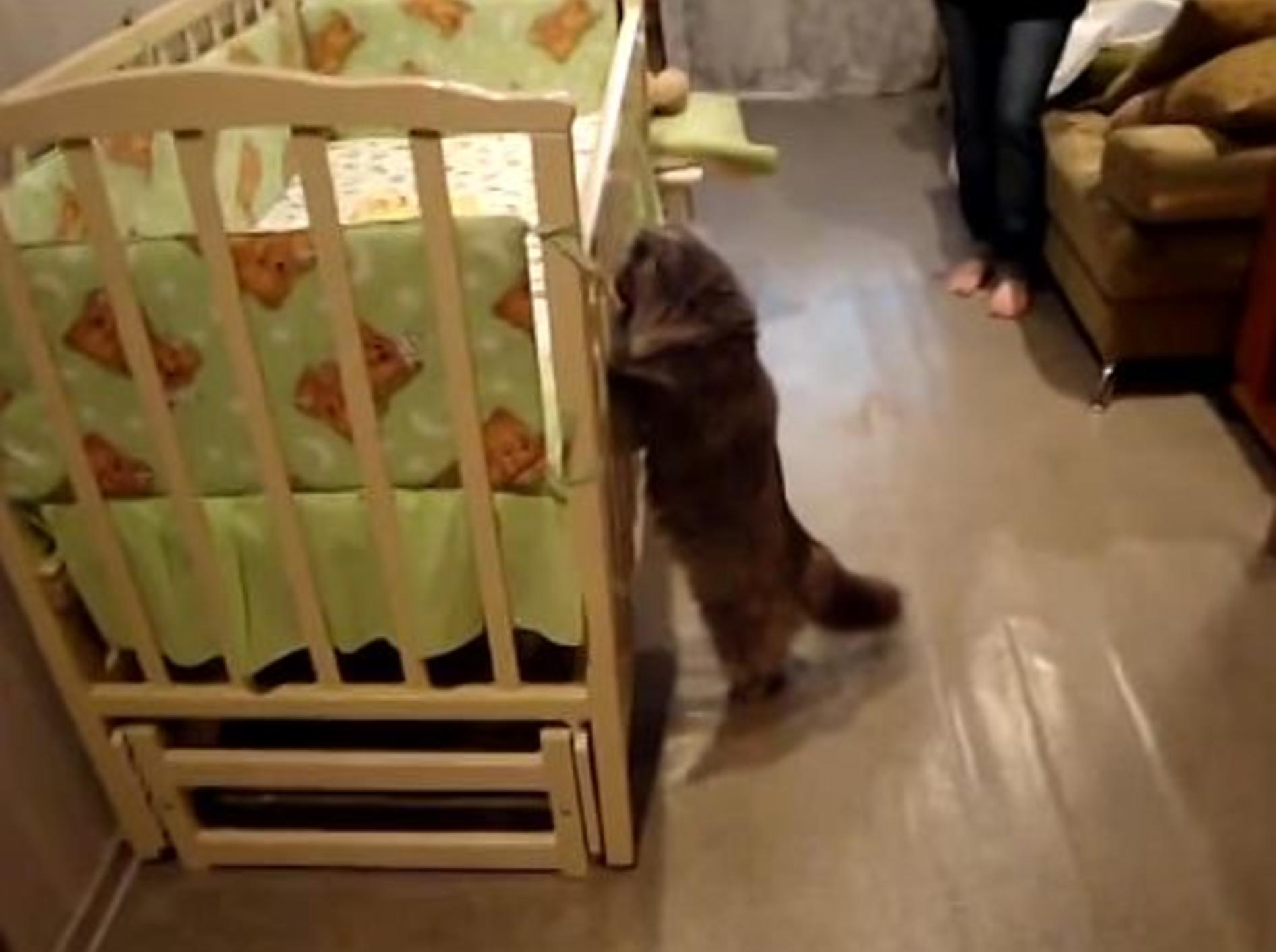 Neugierige Katze sieht zum ersten Mal ein Baby – Bild: Youtube / ***FunnyBabies&CutePets ***