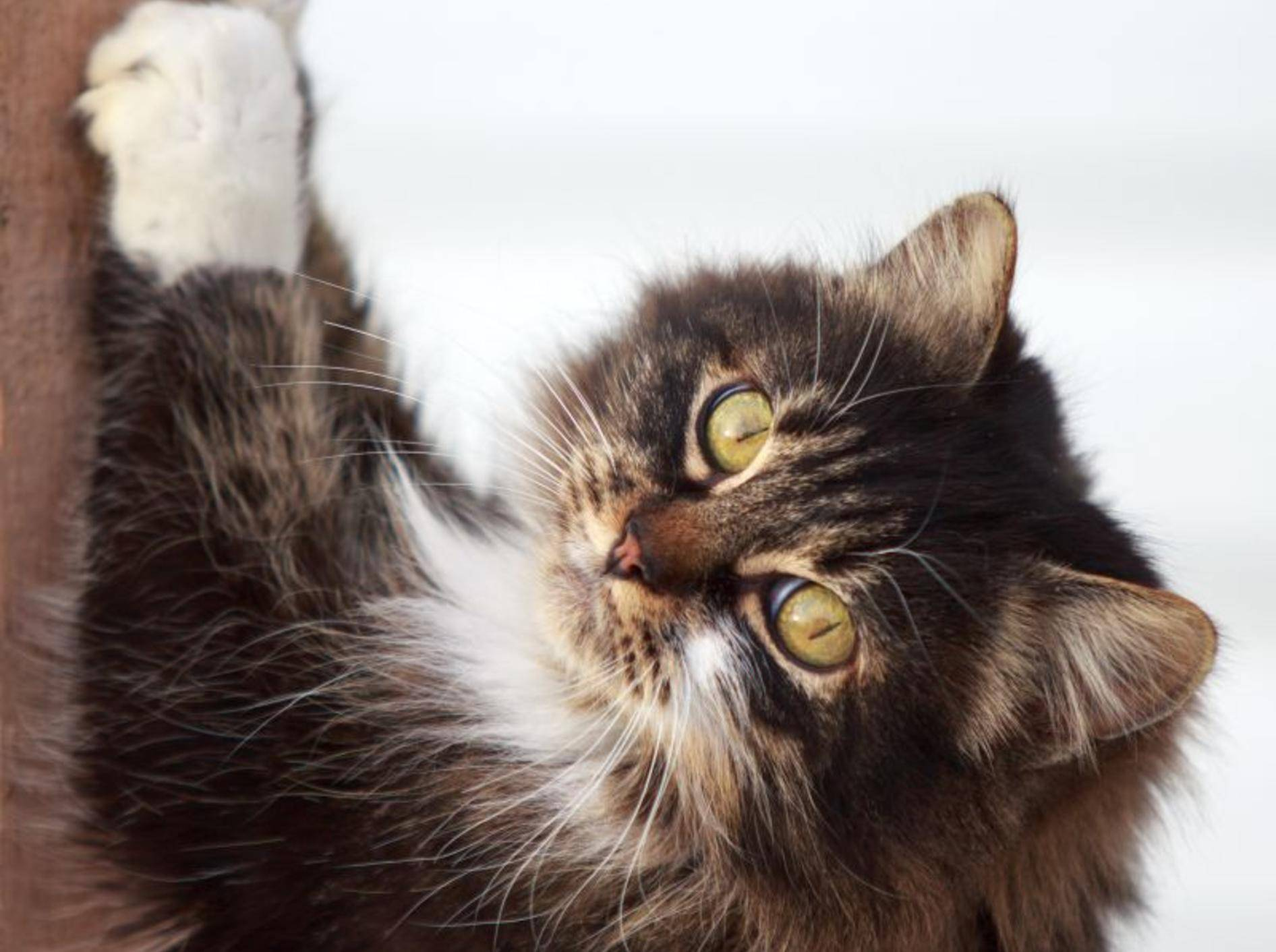 Kratzen an der Schlafzimmertür: Für die meisten Katzen gang und gäbe – Bild: Shutterstock / DragoNika