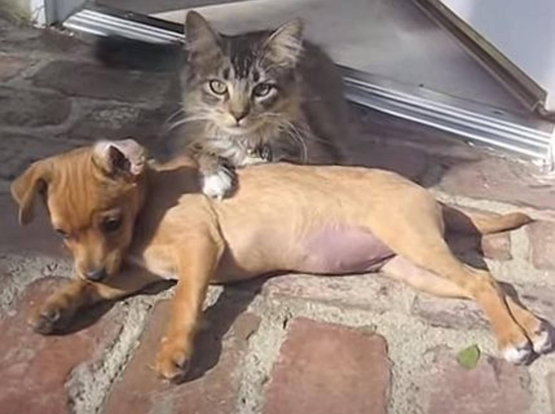 Katze und Hund: So schön ist Freundschaft – Bild: Youtube / ekibrick