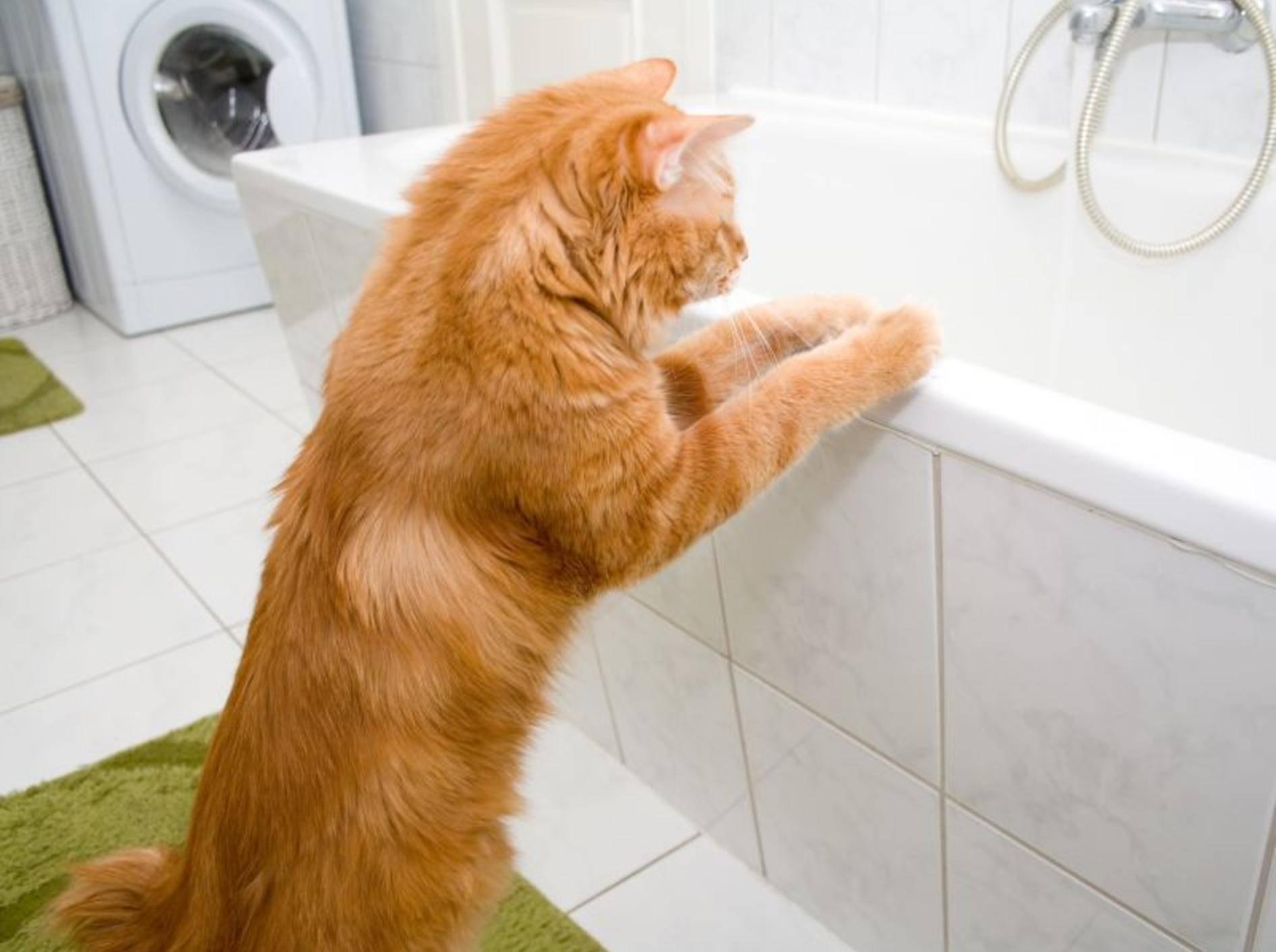 Darf man Katzen baden? Wen es nach ihnen geht, sicher nicht – Bild: Shutterstock / Asasirov