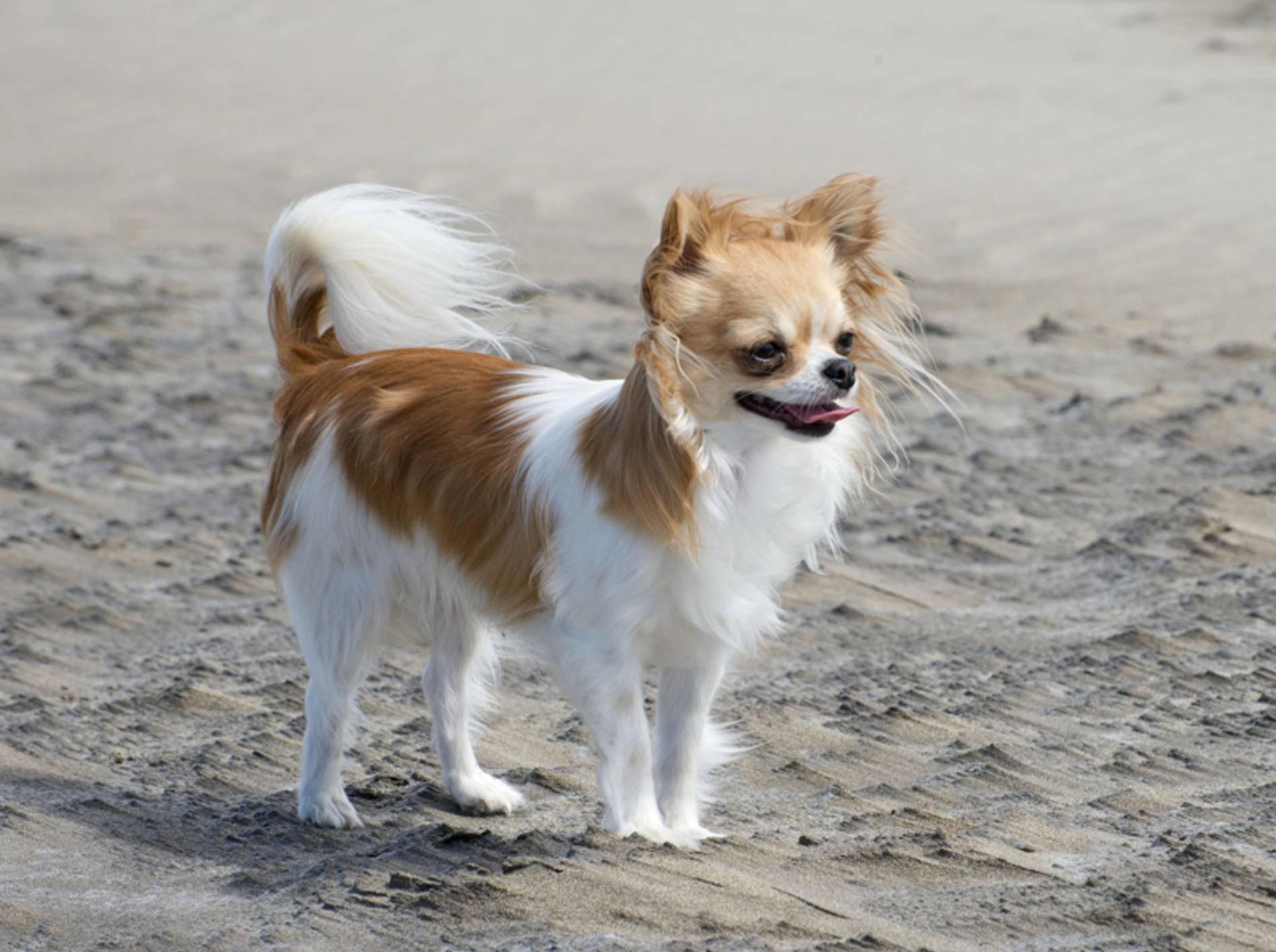 Wenn der Vierbeiner mit in den Urlaub soll, muss einiges ins Hundegepäck – Shutterstock / cynoclub