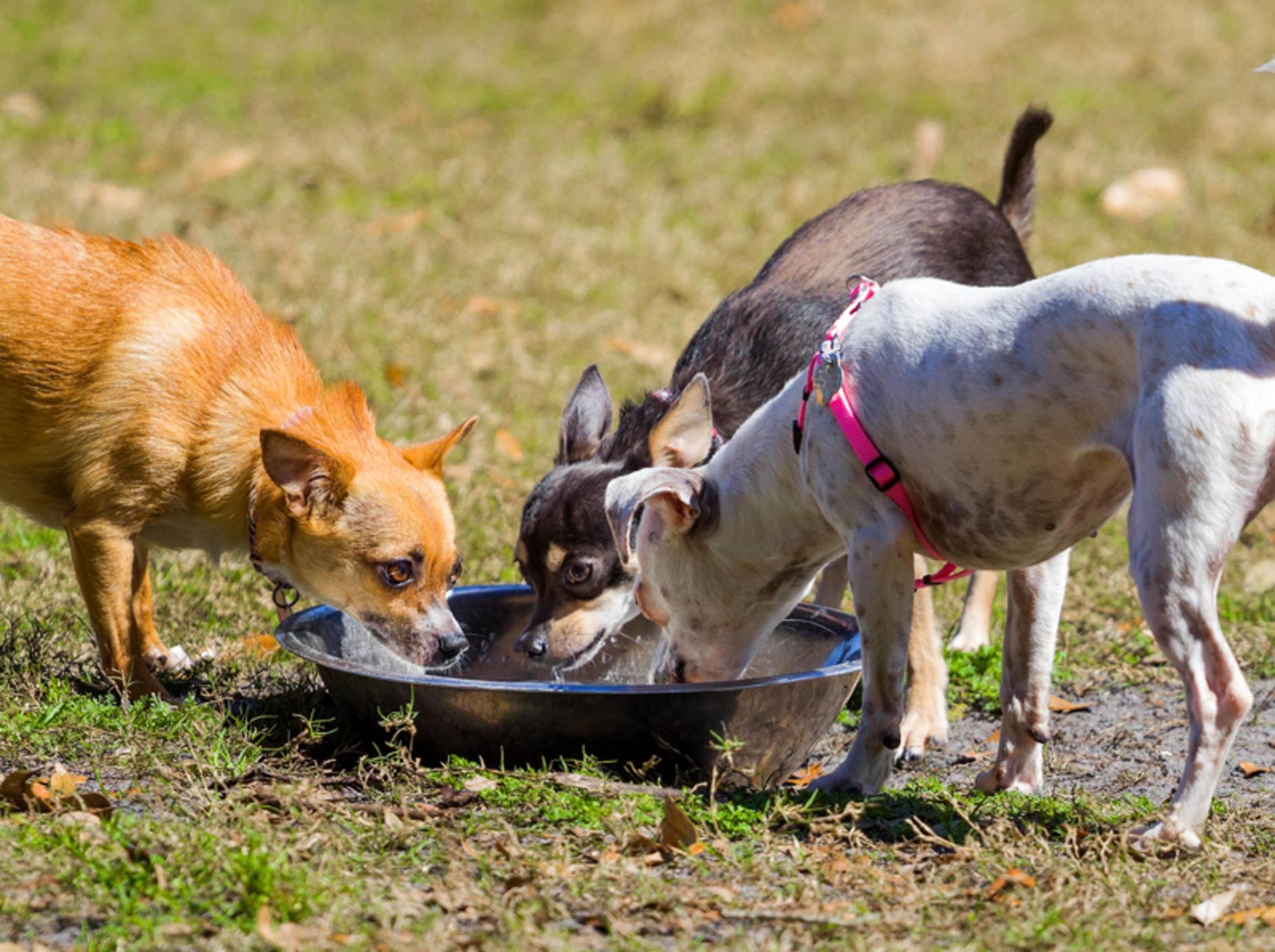 Die anderen Tiere sind wichtig dafür, dass Ihr Hund sich in der Tierpension wohlfühlt – Bild: Shutterstock / Drew Horne