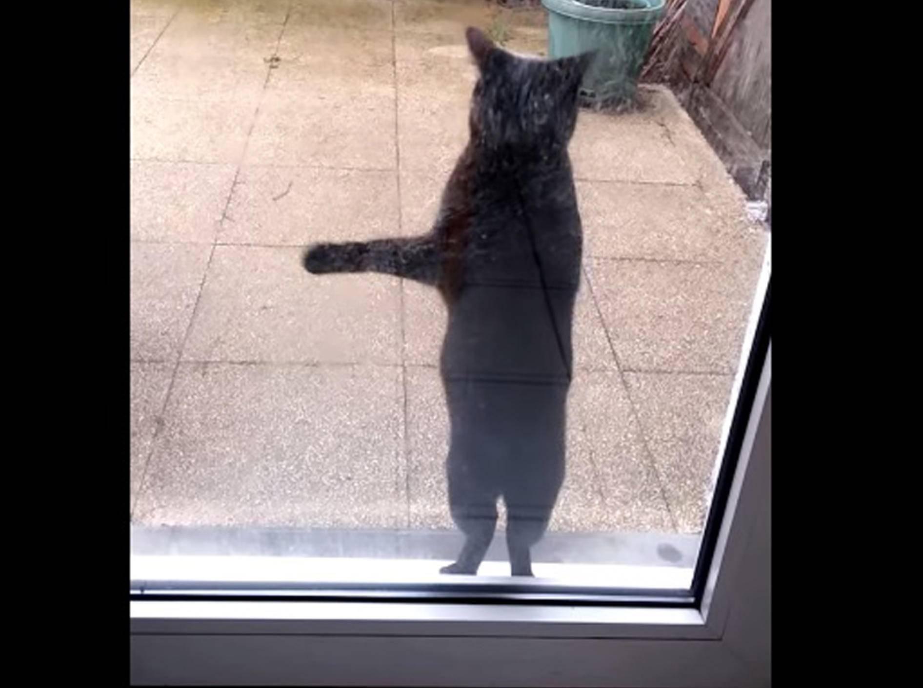 "Süße Katze: ""Lass mich reeeiiin!"" – Bild: Youtube / Edouard Falempin"