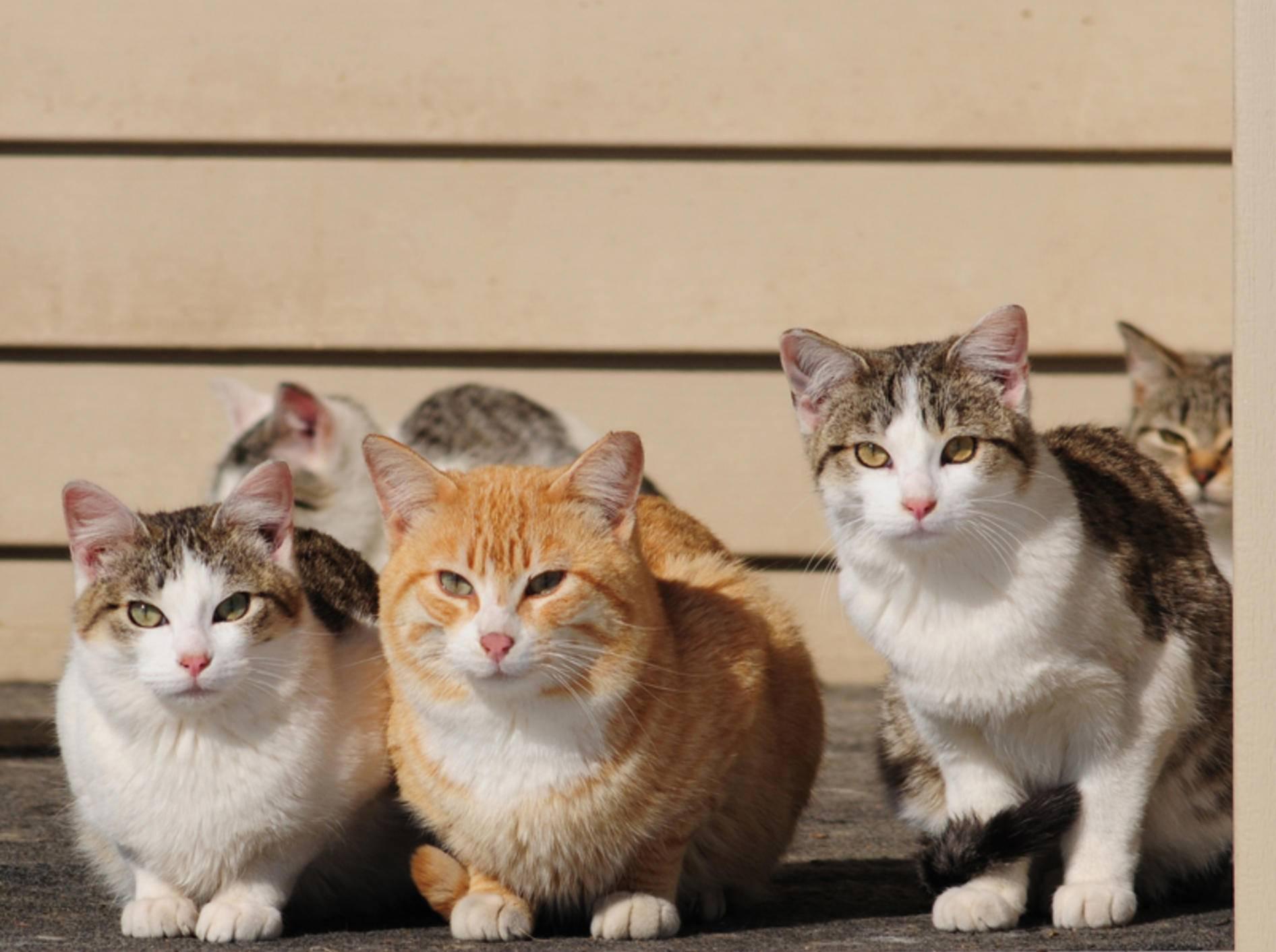 Katzenpensionen sind gute Tipps für die Ferienzeit – Bild: Shutterstock / Nancy Bauer