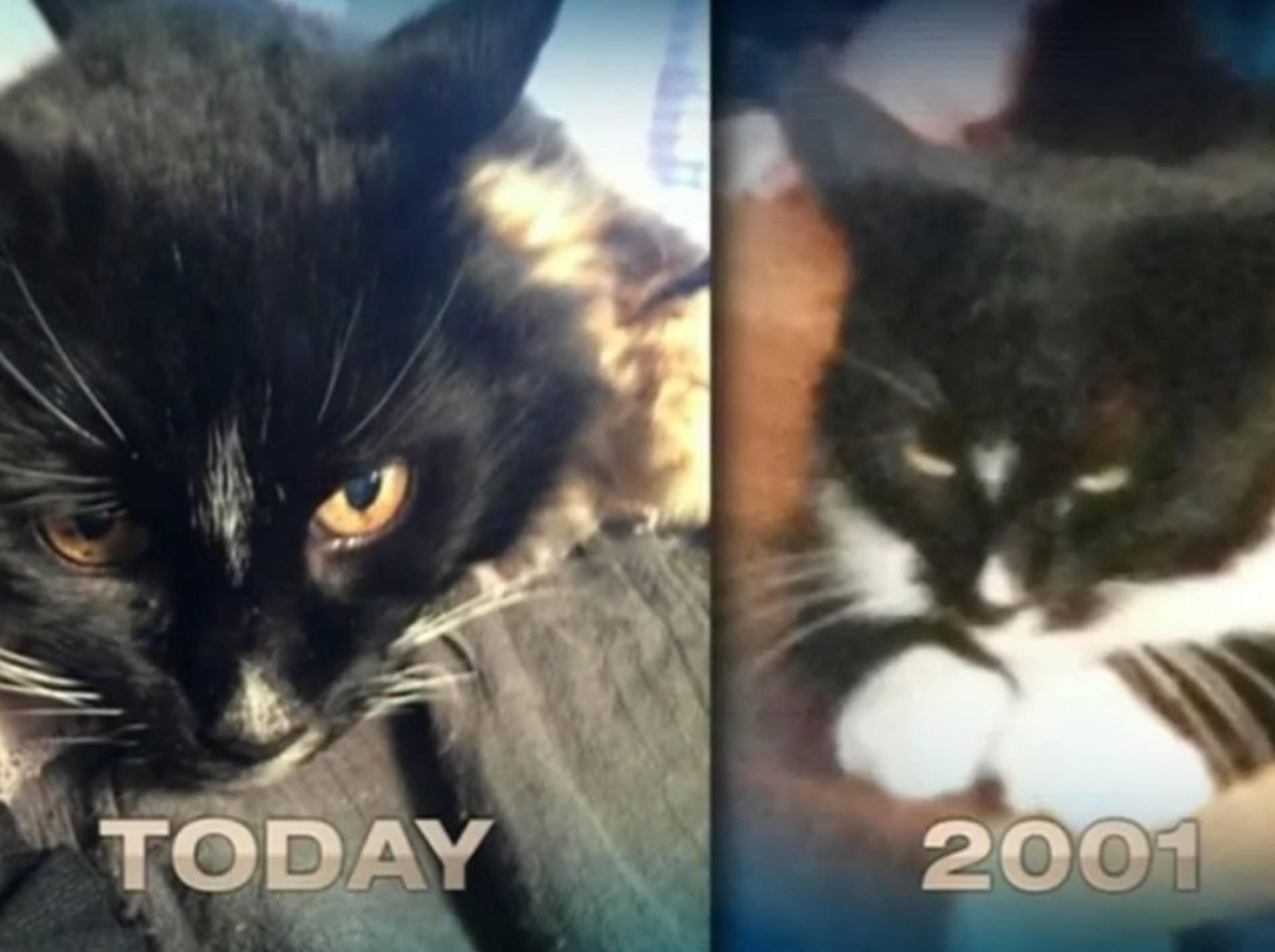 Verschwundene Katze: Heimkehr nach 13 Jahren – Bild: Youtube / 7NEWS