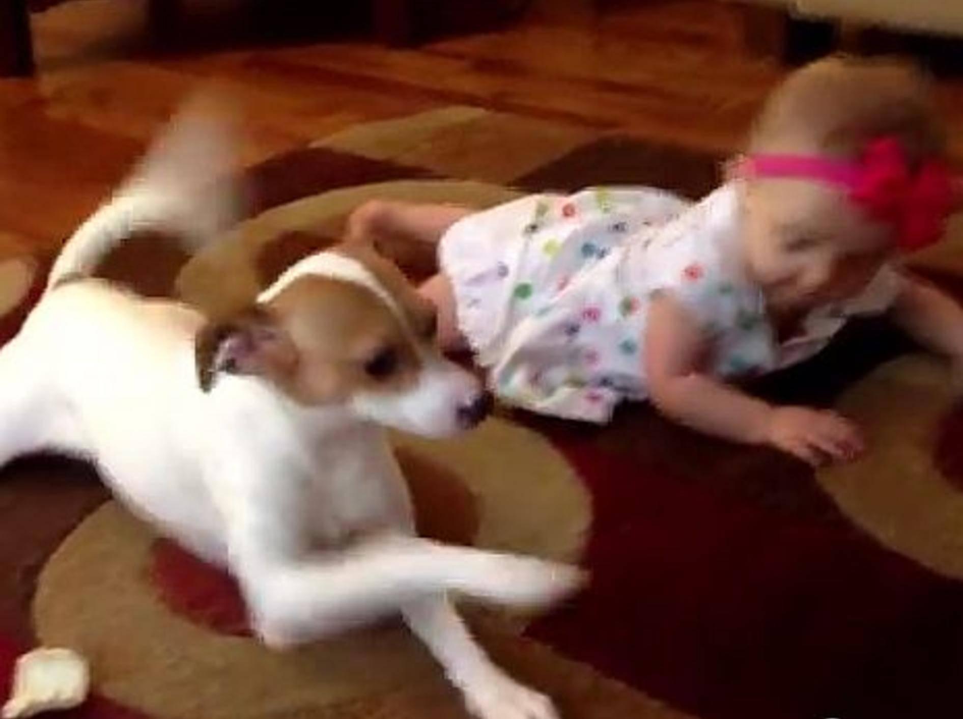 Lustiger Hund gibt Krabbelunterricht – Bild: Youtube / Valerie Stevens-Scott