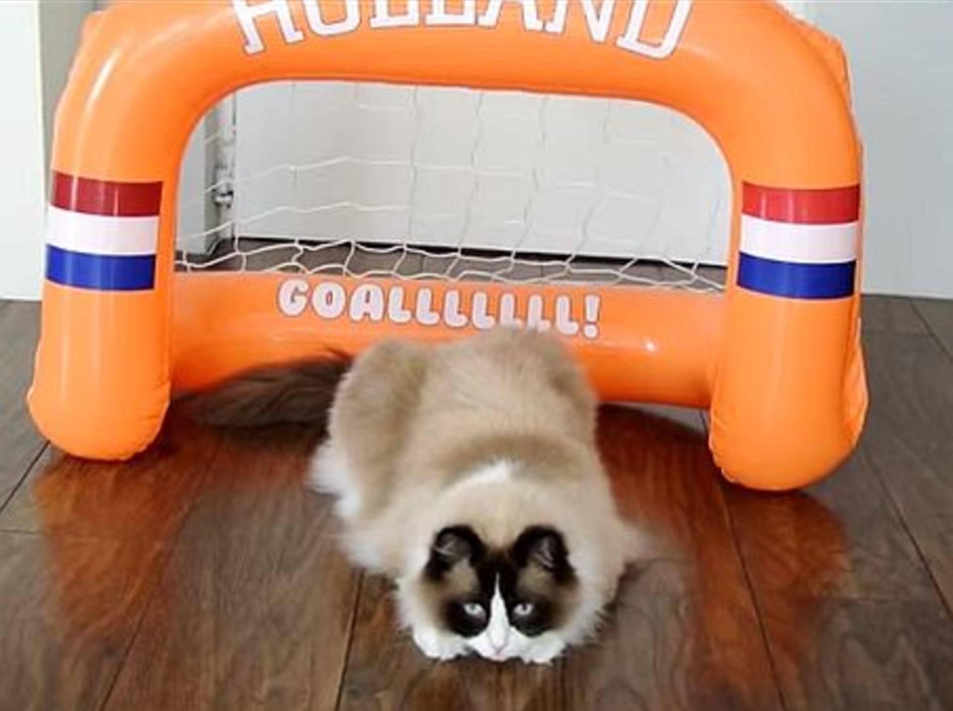 Ragdoll-Kater Timo ist bereit für die WM – Bild: Youtube / Xiedubbel