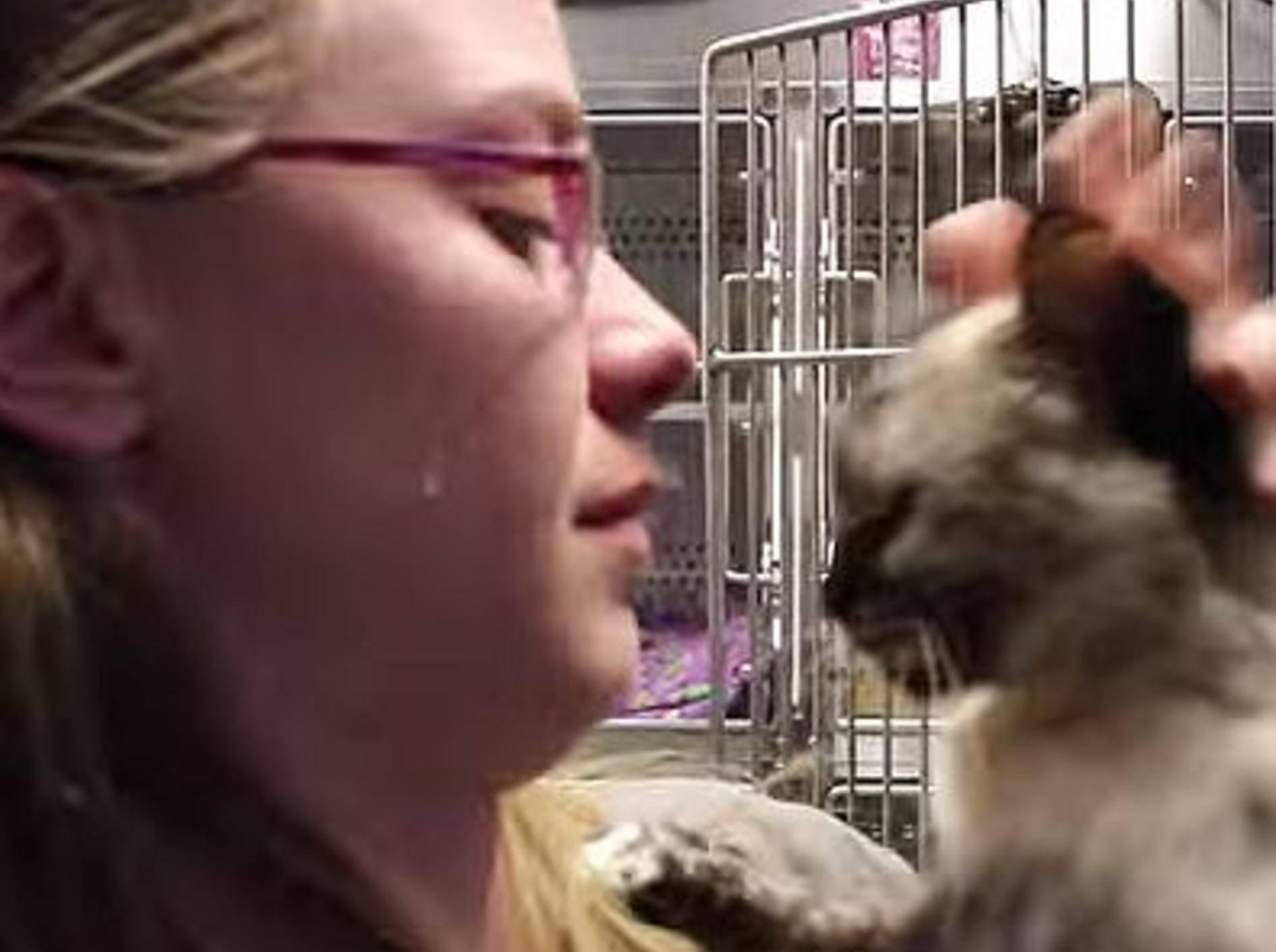 Rührendes Wiedersehen im Tierheim – Bild: Youtube / WaysideWaifs