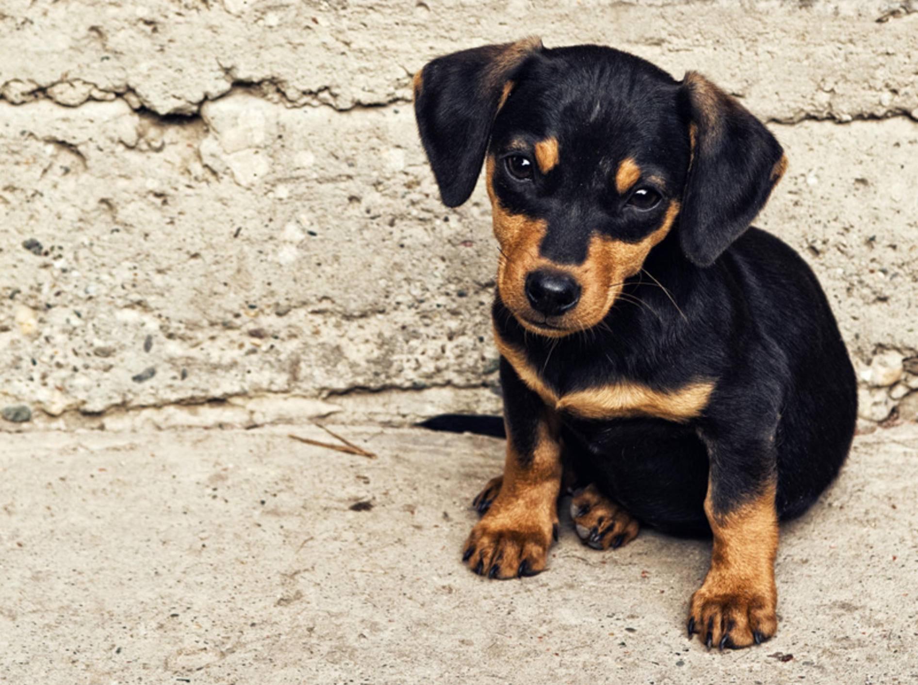 In Stresssituationen können Rescue-Tropfen für Hunde Abhilfe schaffen – Bild: Shutterstock / igor.stevanovic