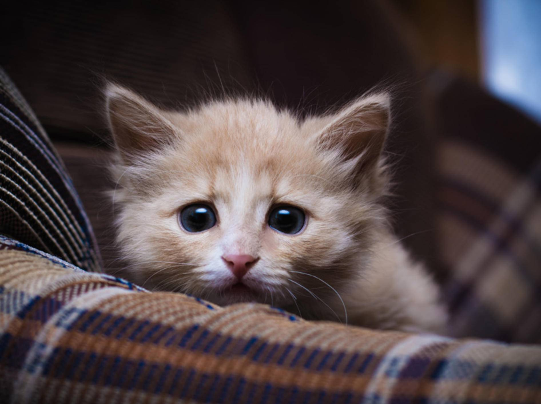 Ein Katzenpsychologe kann beispielsweise bei Angststörungen helfen – Shutterstock: Khamidulin Sergey