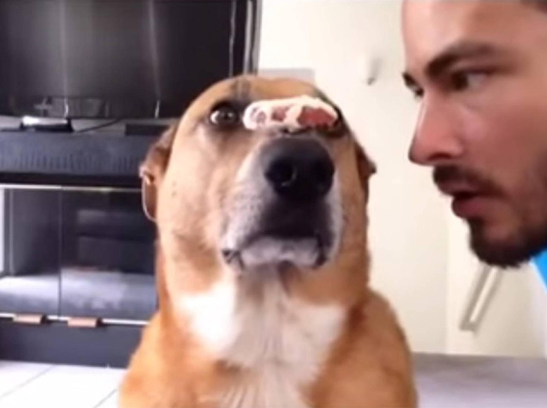 Schlauer Hund ist superdiszipliniert – Bild: Youtube / Alex Zhardanovsky