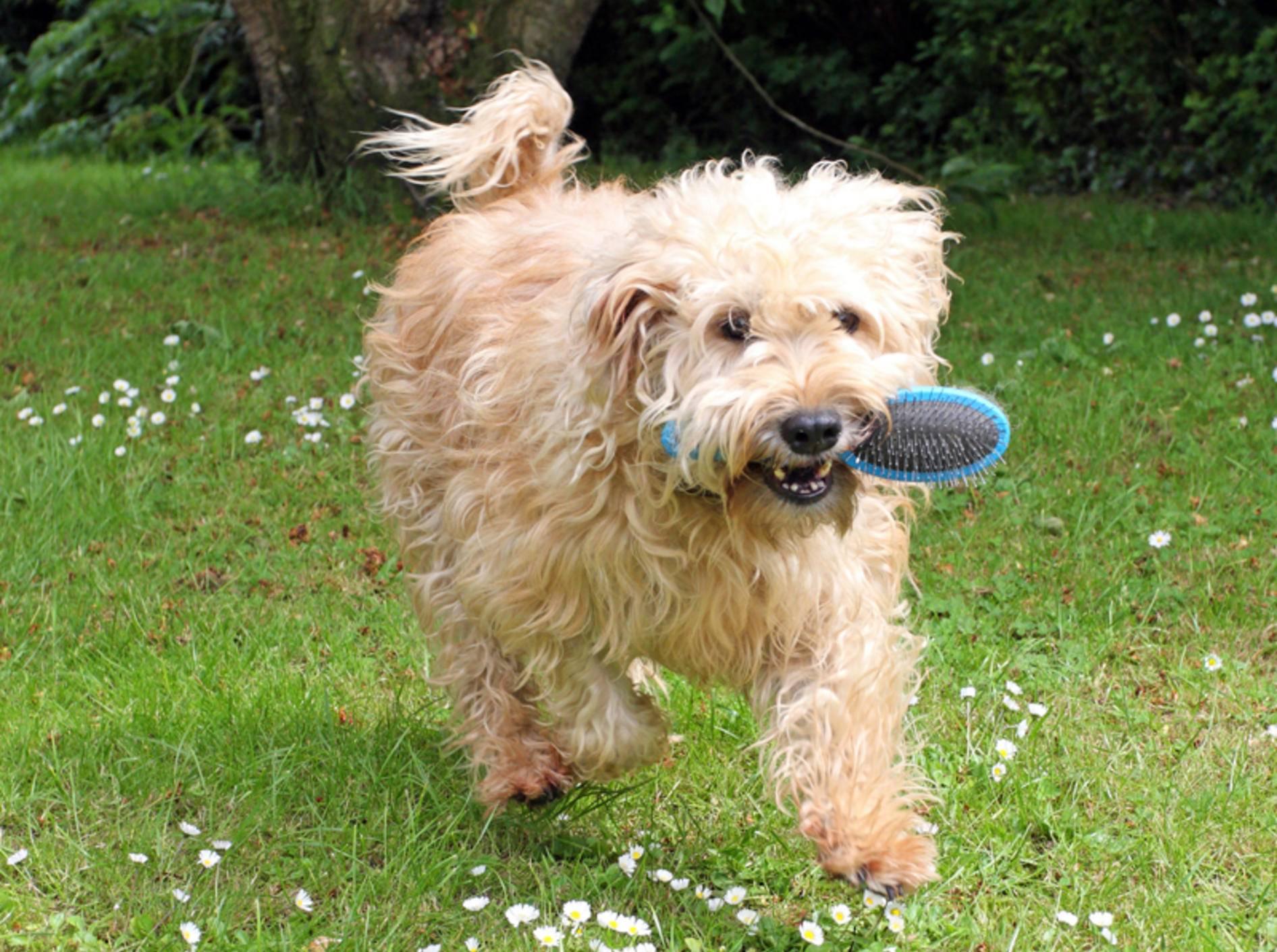 Die besten Hundebürsten zur Fellpflege – Bild: Shutterstock / Denise Allison Coyle