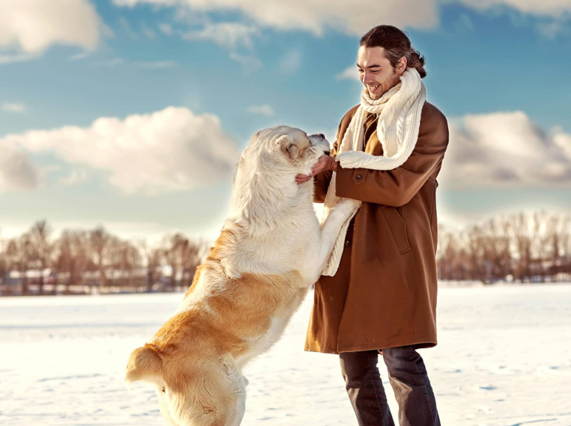Wie kann man einem Hund das Anspringen abgewöhnen– Bild: Shutterstock/Rock-and-Wasp