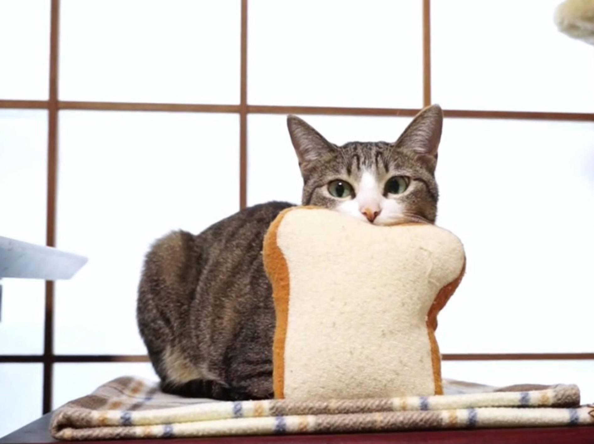Lustige Katze auf Plüsch-Toast-Pirsch – Bild: Youtube / MAKO0MAKO0