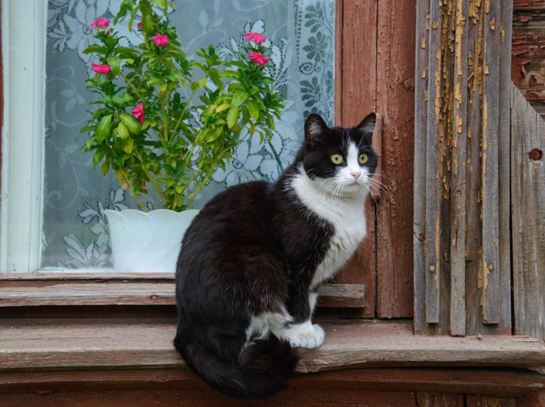Homöopathie für Katzen ist eine ganzheitliche Heilmethode – Bild: Shutterstock / Kuznetsov Denis