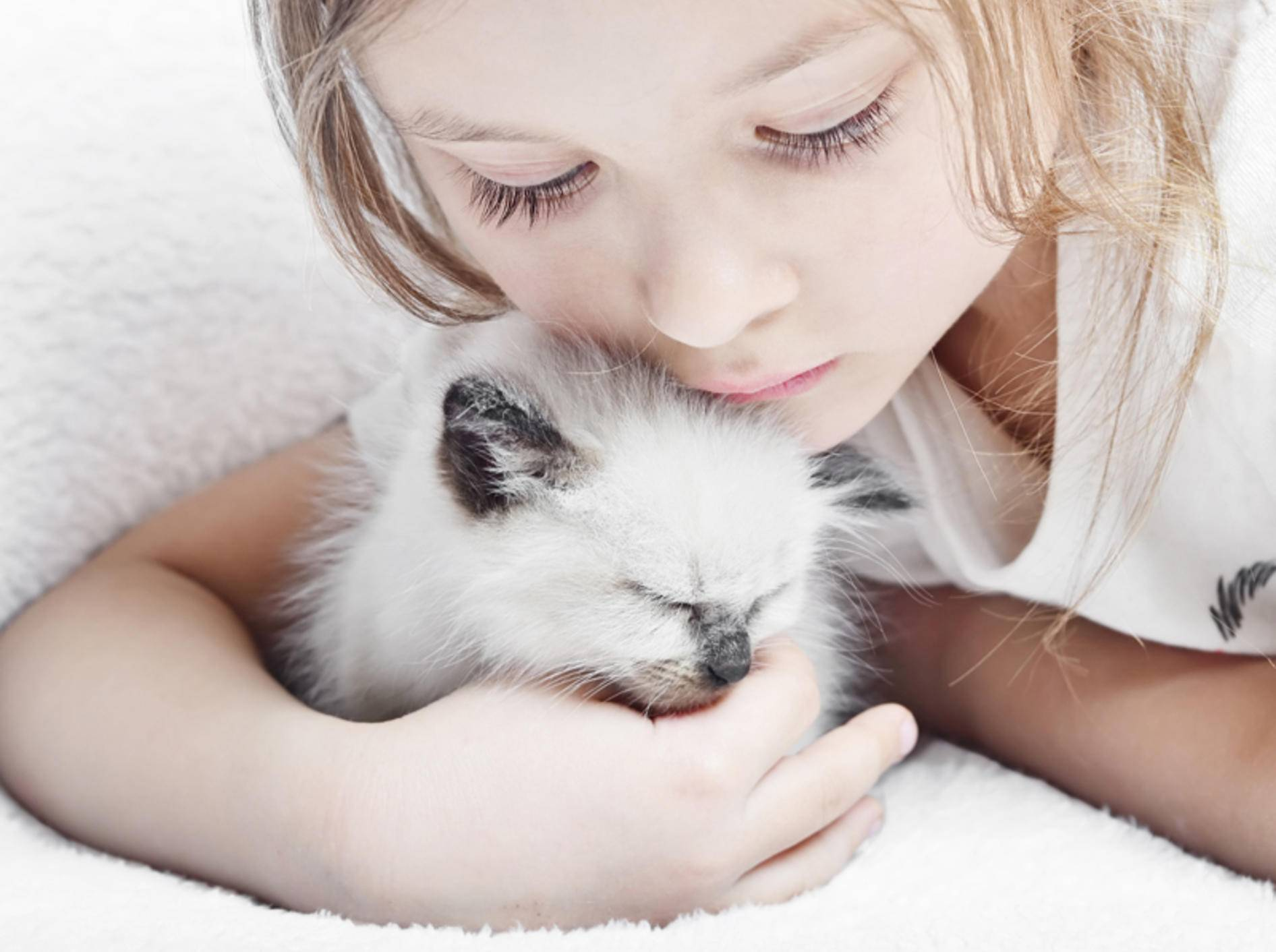 Ragdolls gehören zu den idealen Katzenrassen für Kinder – Bild: Shutterstock / gurinaleksandr