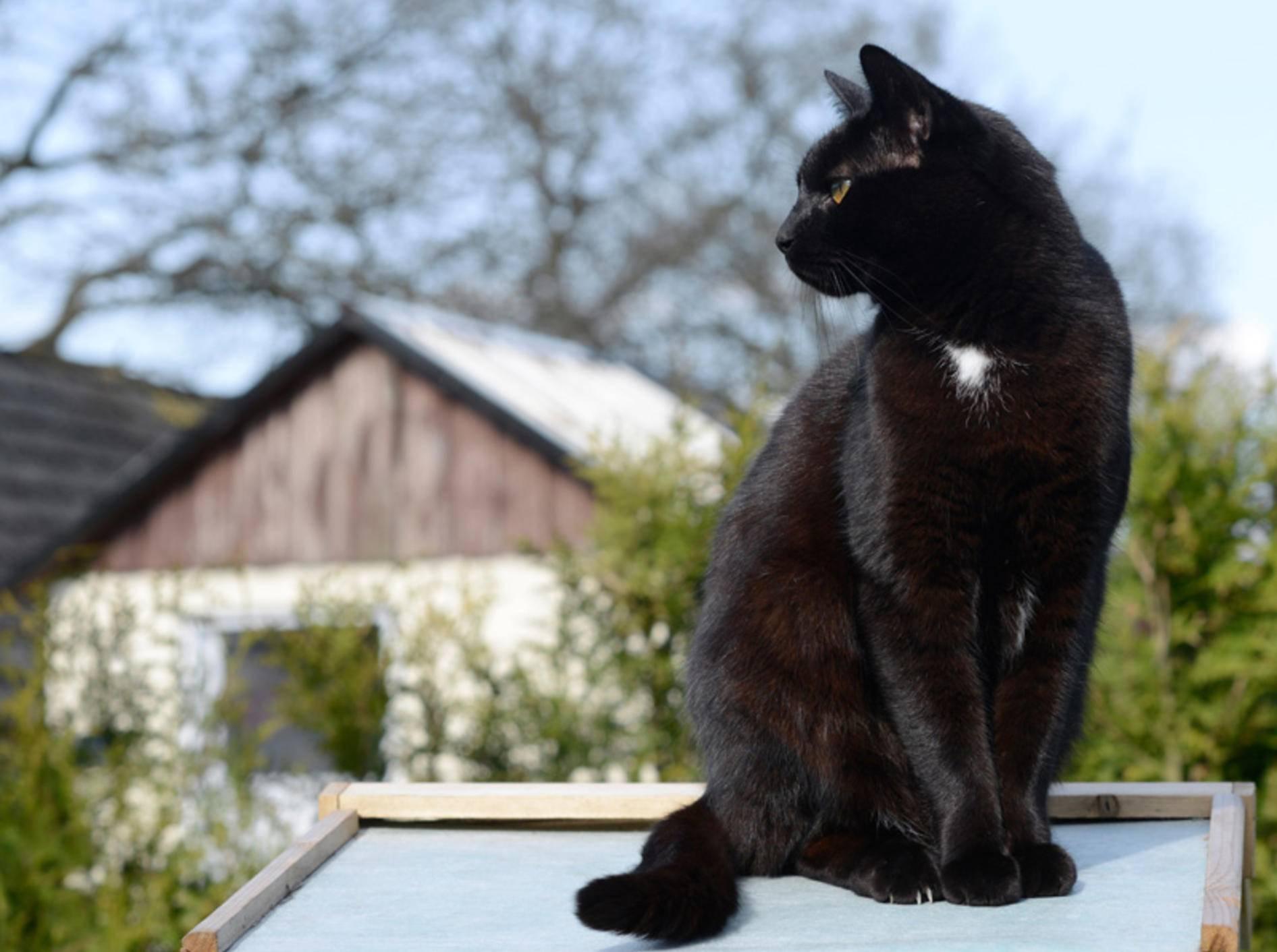 Freiraum ist bei der Pflege und Haltung einer Hauskatze sehr wichtig – Bild: Shutterstock / Schubbel