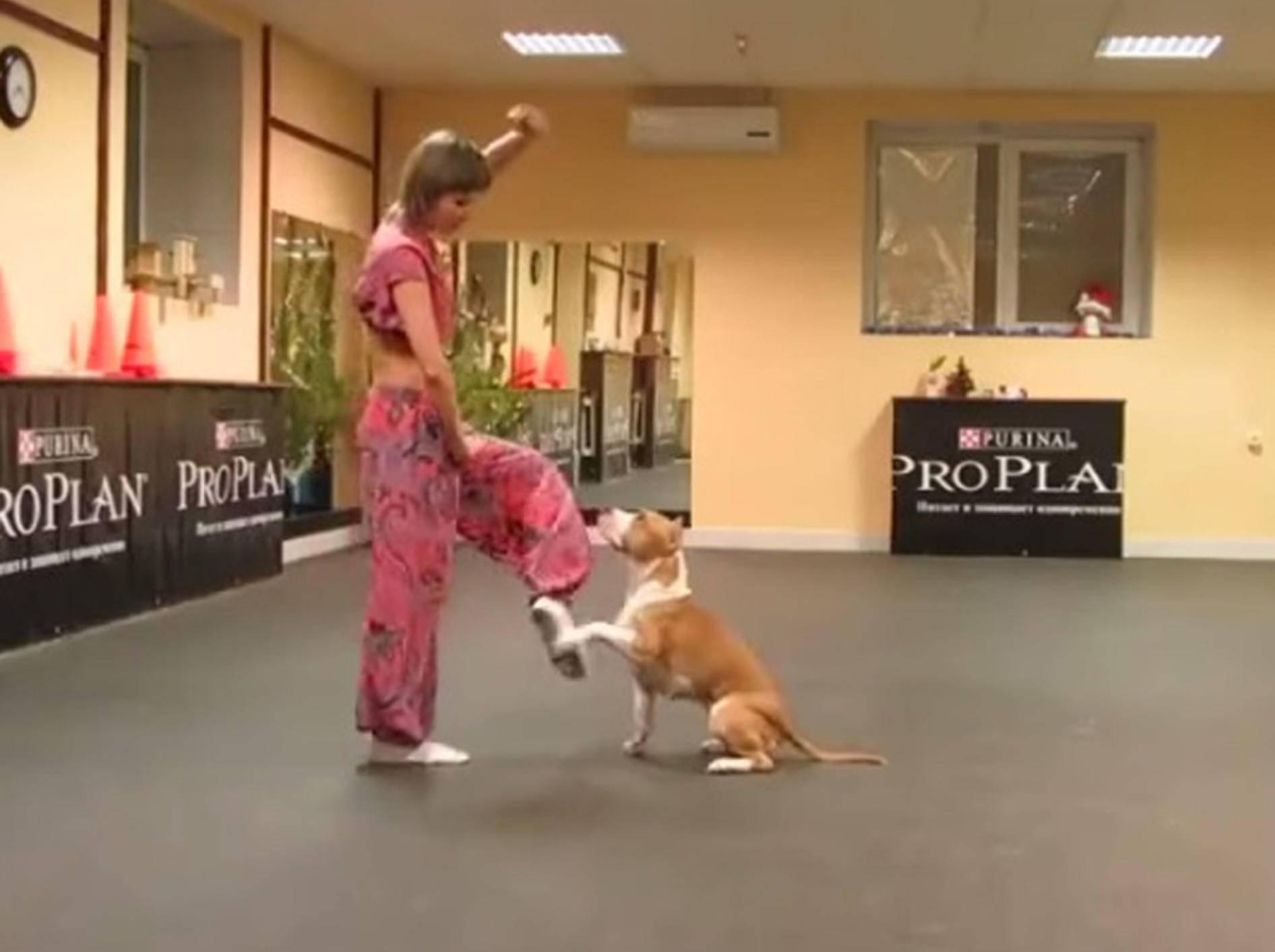 """""""Und Schritt!"""": Tanzstunde mit süßem Hund – Bild: Youtube / Alex Zhardanovsky"""