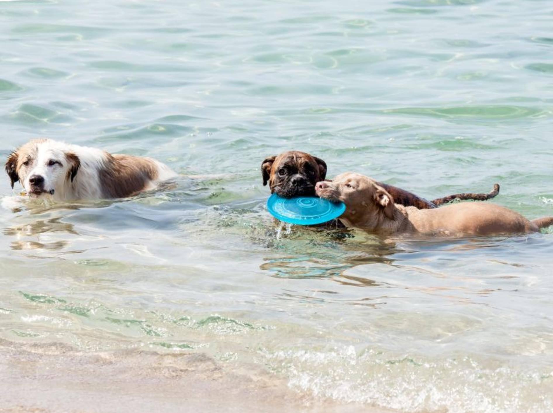 Hundespielzeug, das schwimmen kann – Bild: Shutterstock / maratr