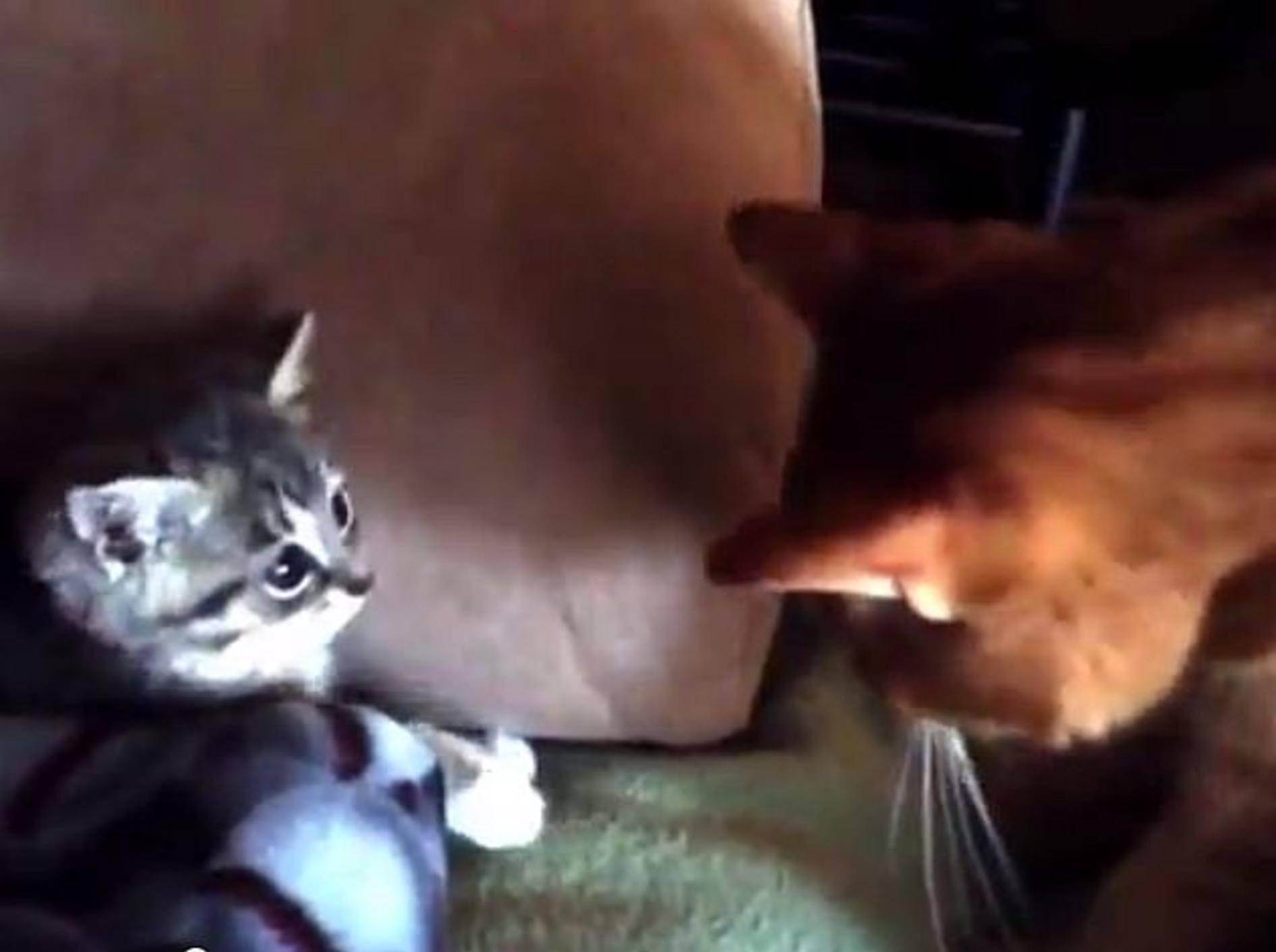 """Kätzchen """"Peeps"""" findet ein neues Zuhause – Bild: Youtube / SAMJANESPERRY"""