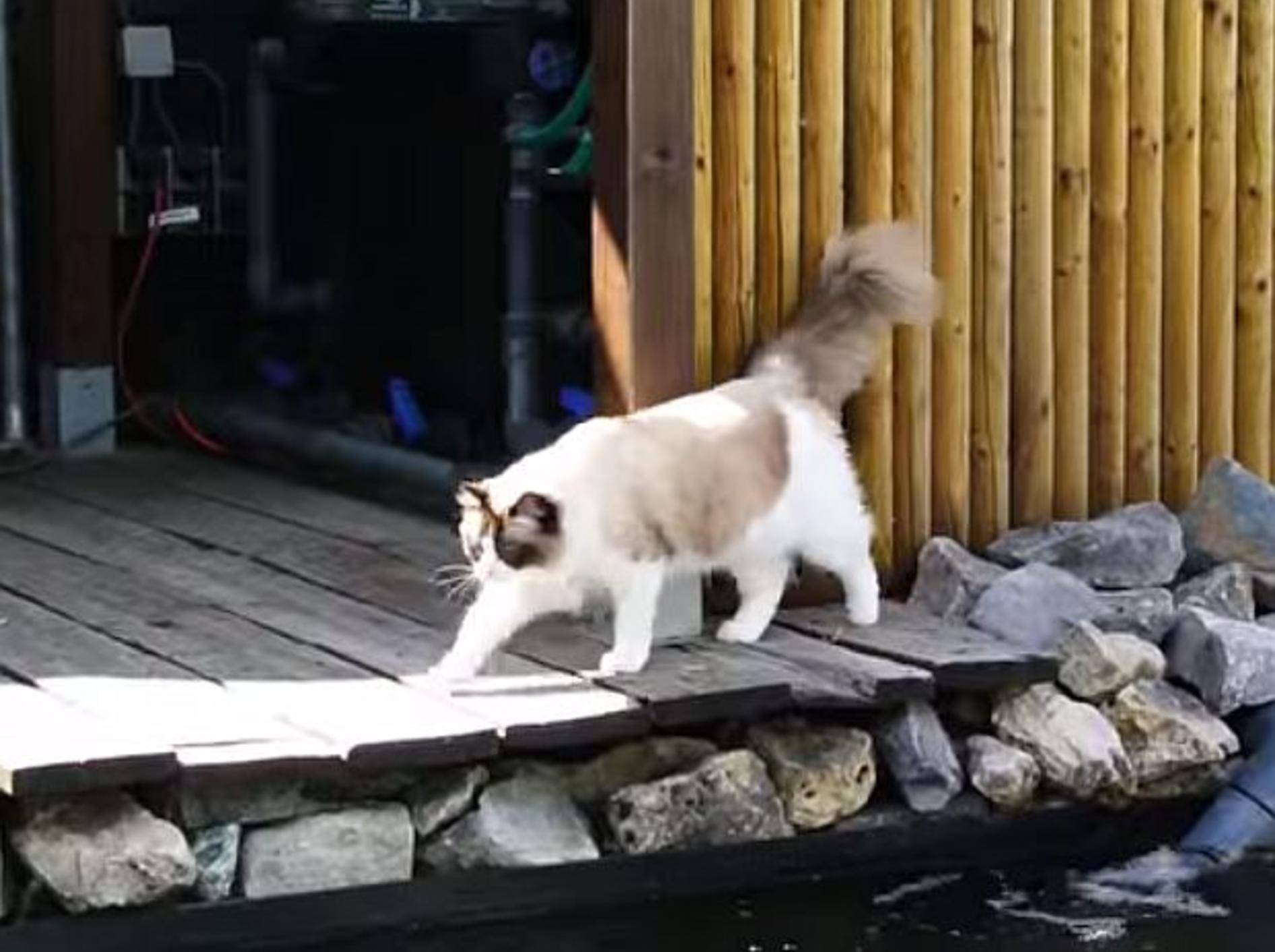 Katzenausflug zum Fischteich – Bild: Youtube / Xiedubbel