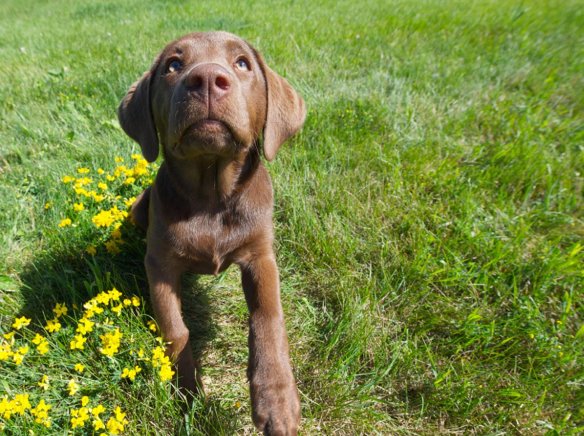 Hund hört nicht: Was ist zu tun? – Bild: Shutterstock / Kelly Nelson